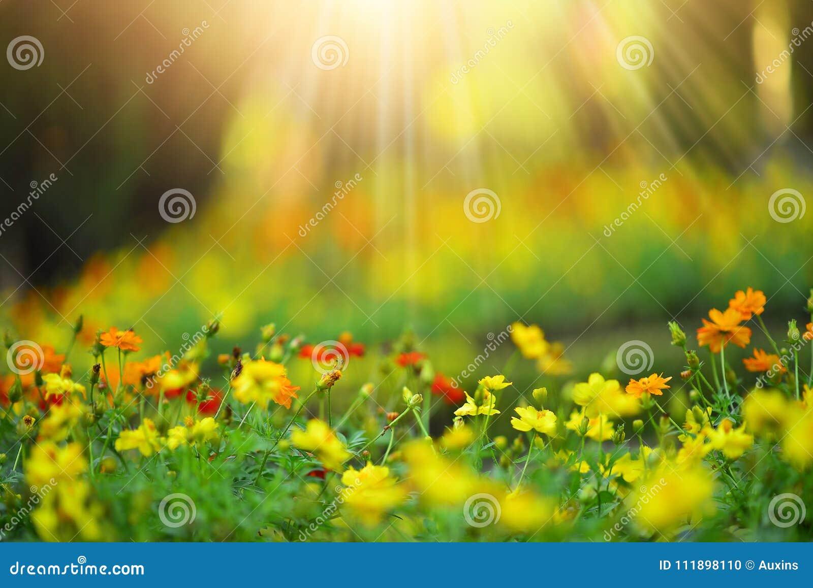 Flor bonita do prado selvagem no fundo da luz solar da manhã Sel