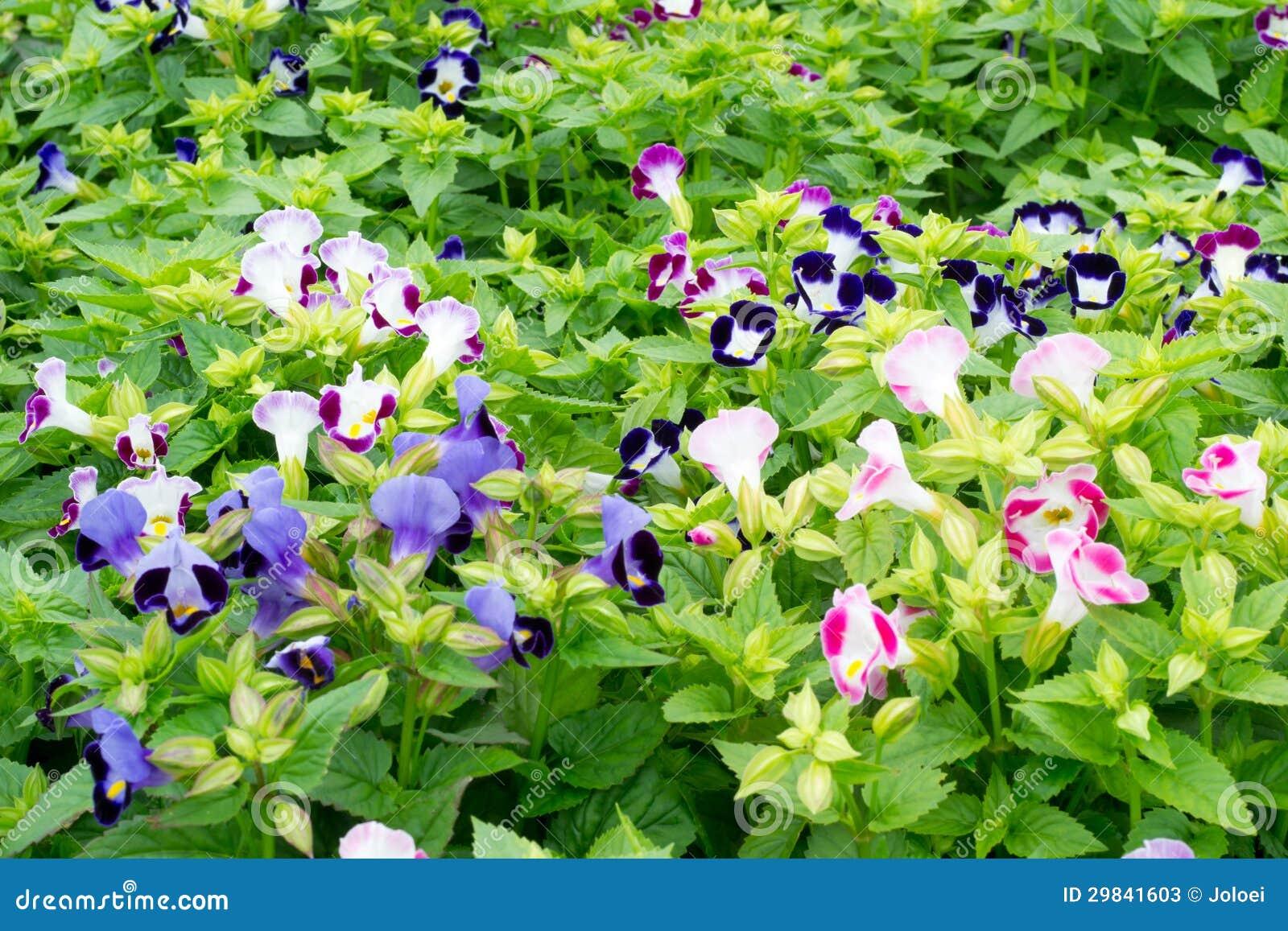 Florescência da flor