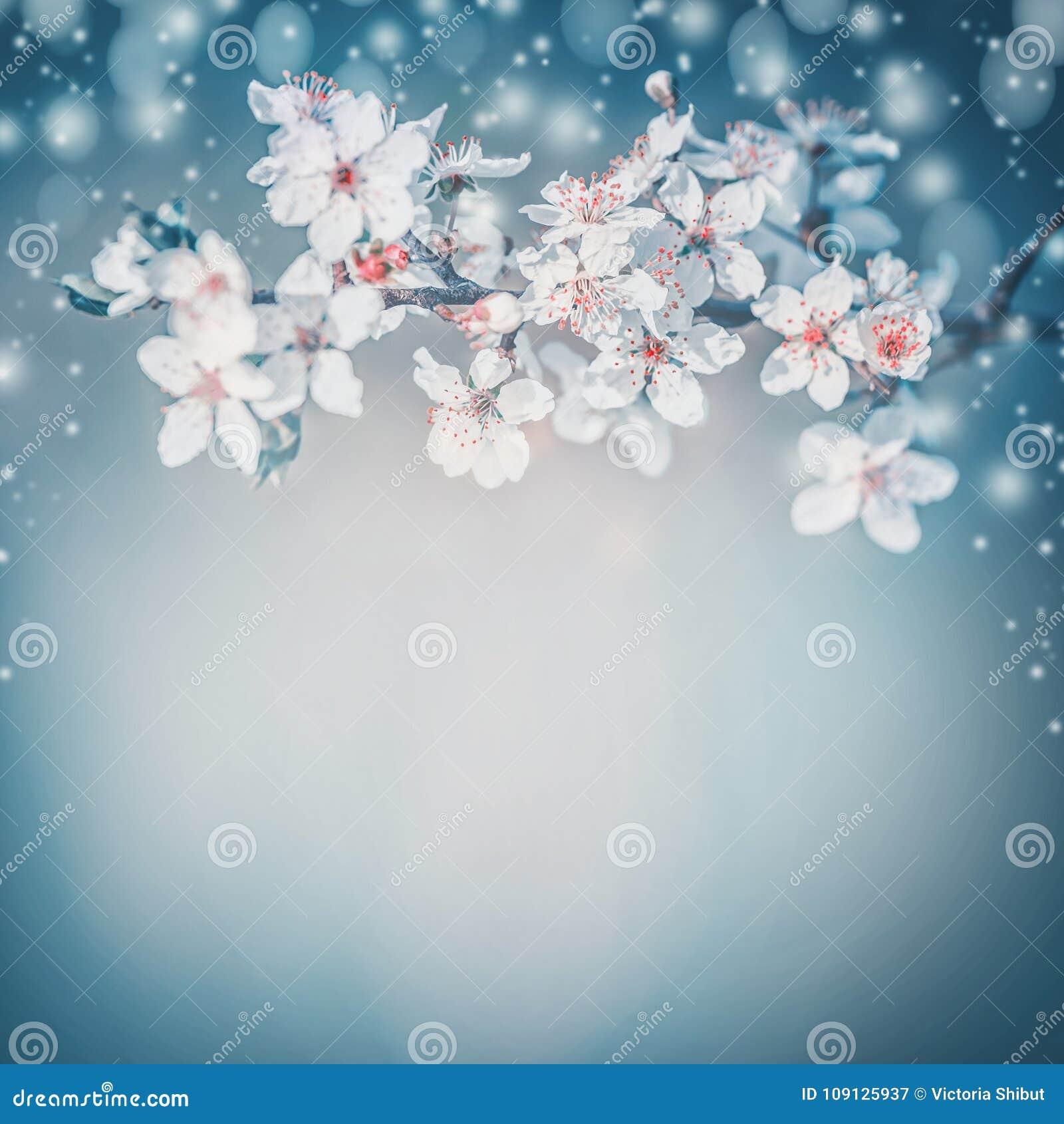 Flor bonito de la primavera La floración blanca de la primavera de la cereza, flores en la turquesa empaña la naturaleza