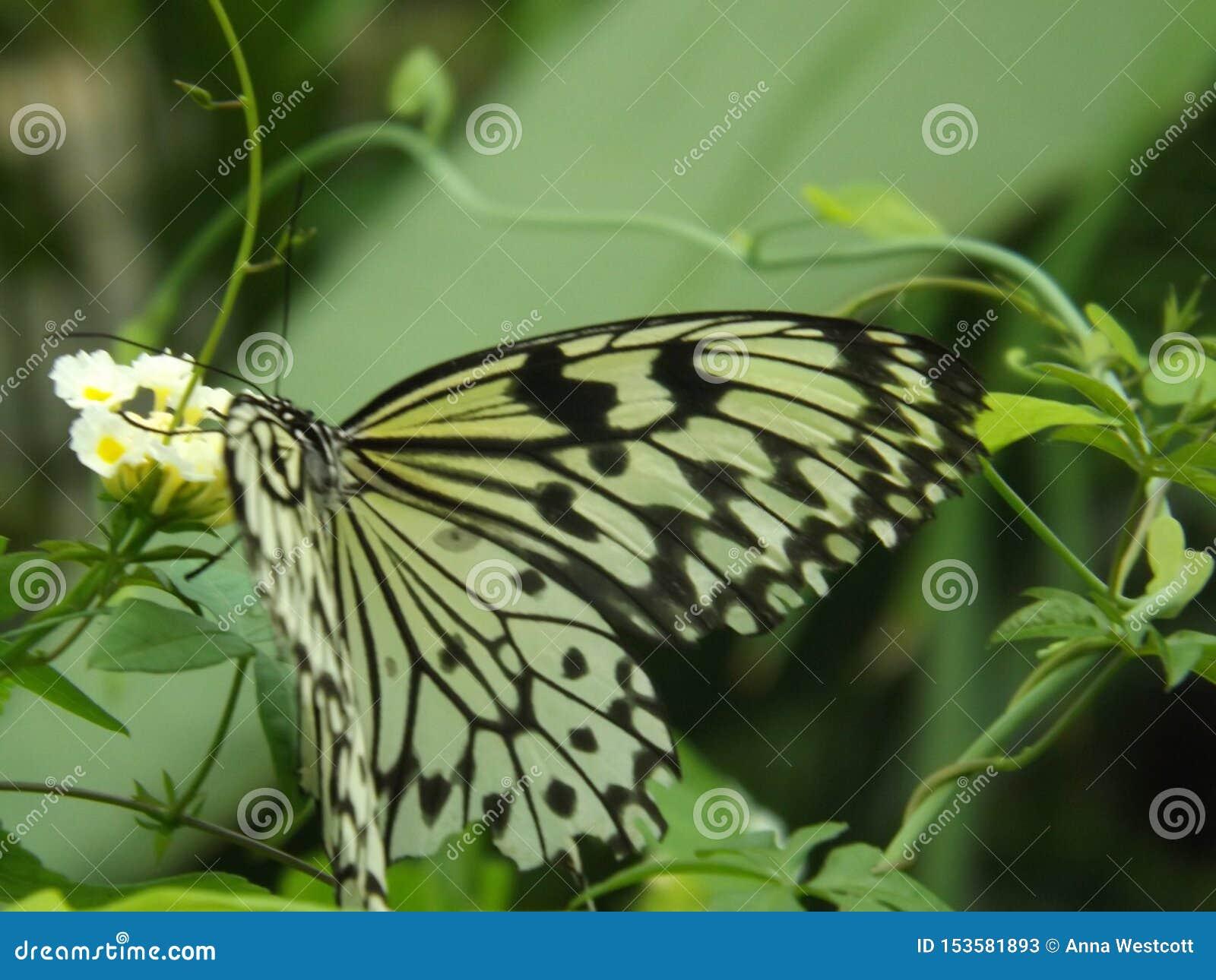 Flor branca com borboleta