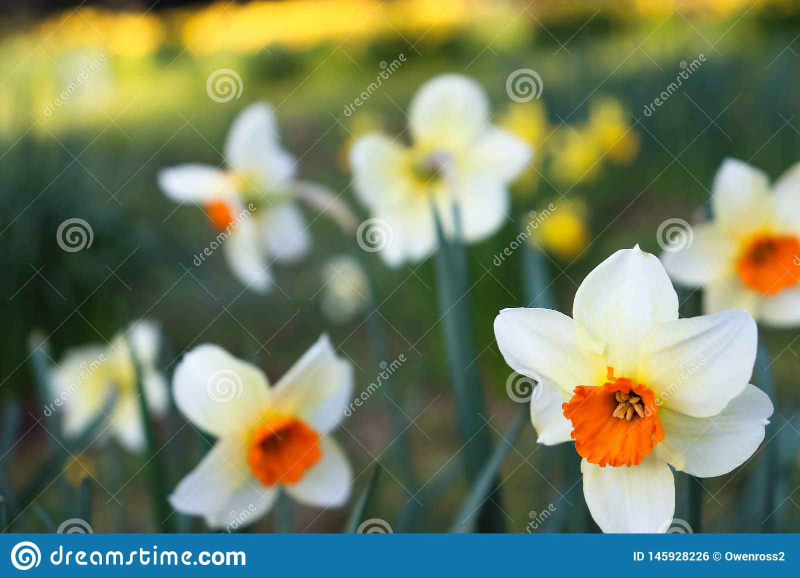 Flor branca/vermelha no primeiro plano com fundo borrado