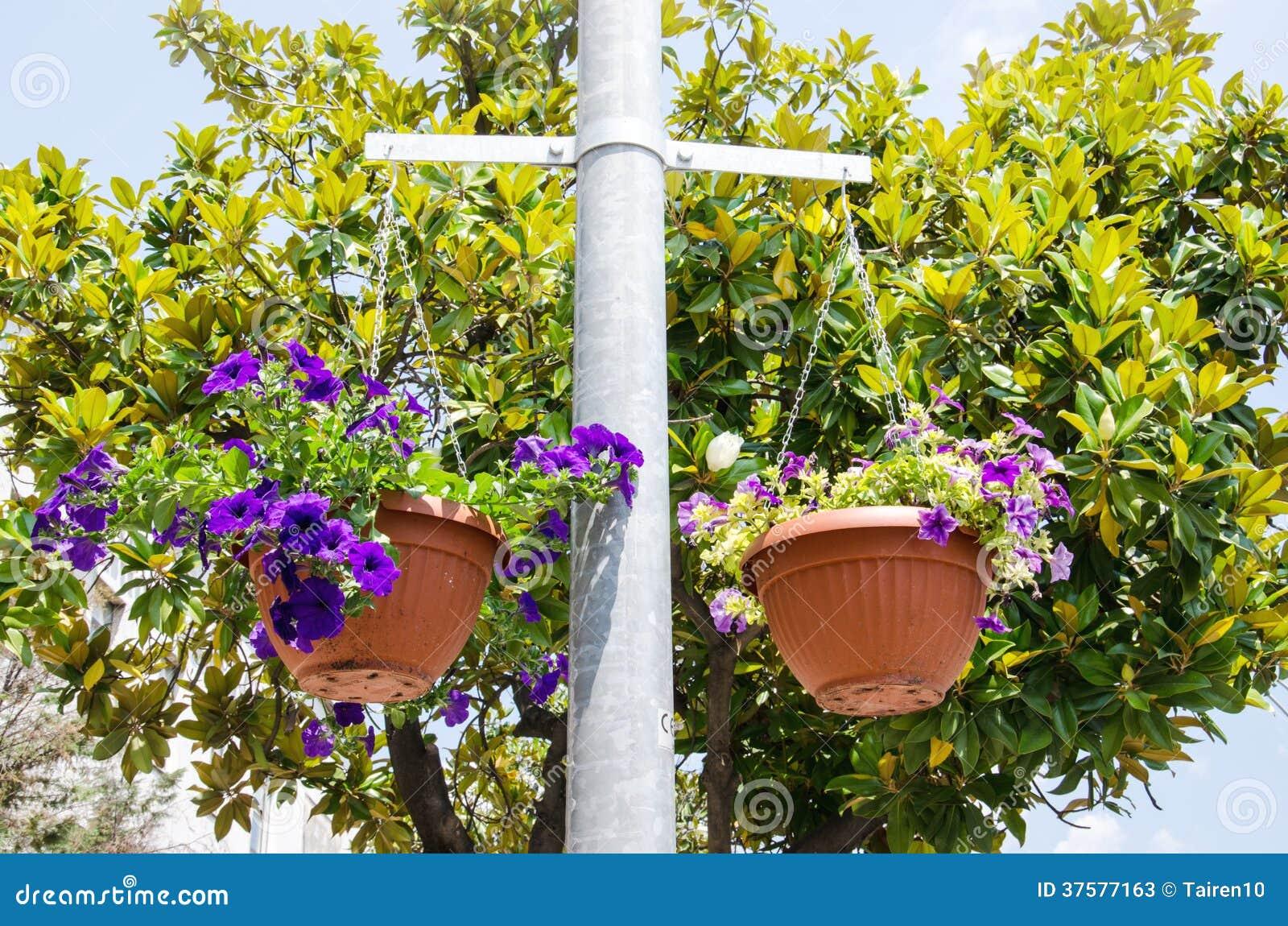 Flor brilhante no potenciômetro