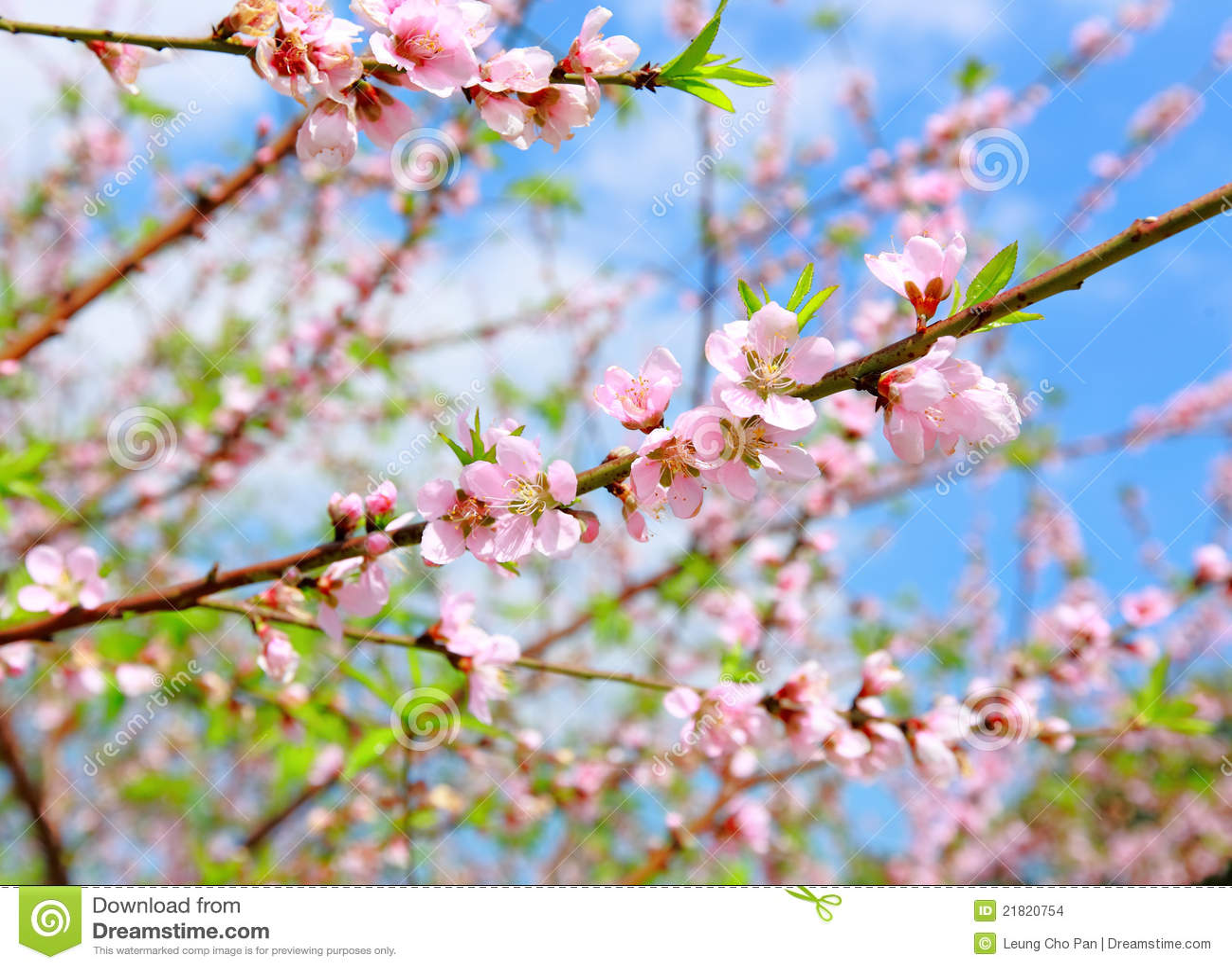 Flor chino del flor-melocotón de la decoración del Año Nuevo