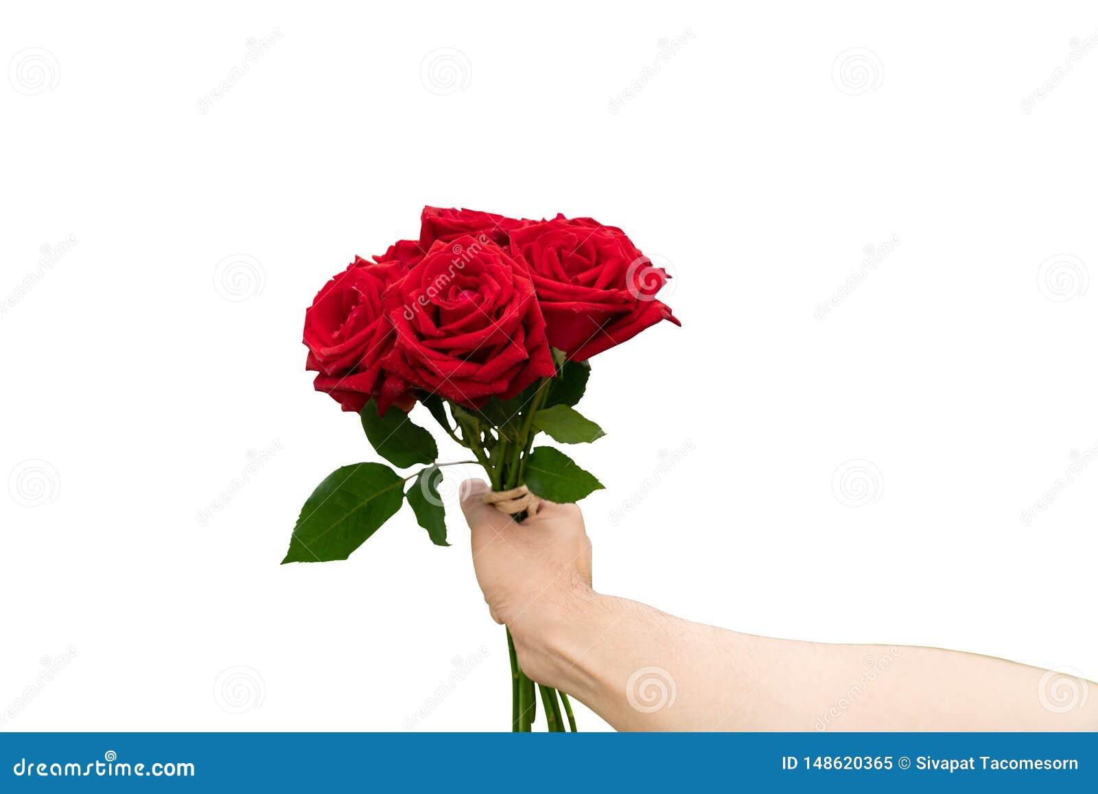 Flor color de rosa del rojo en el fondo blanco