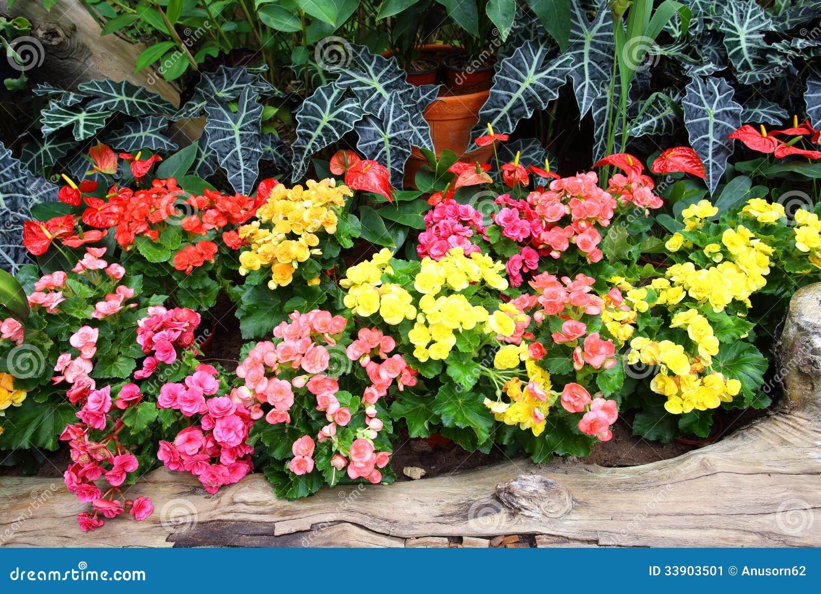 Muitas vezes Flor colorida no jardim imagem de stock. Imagem de flor - 33903501 ER74