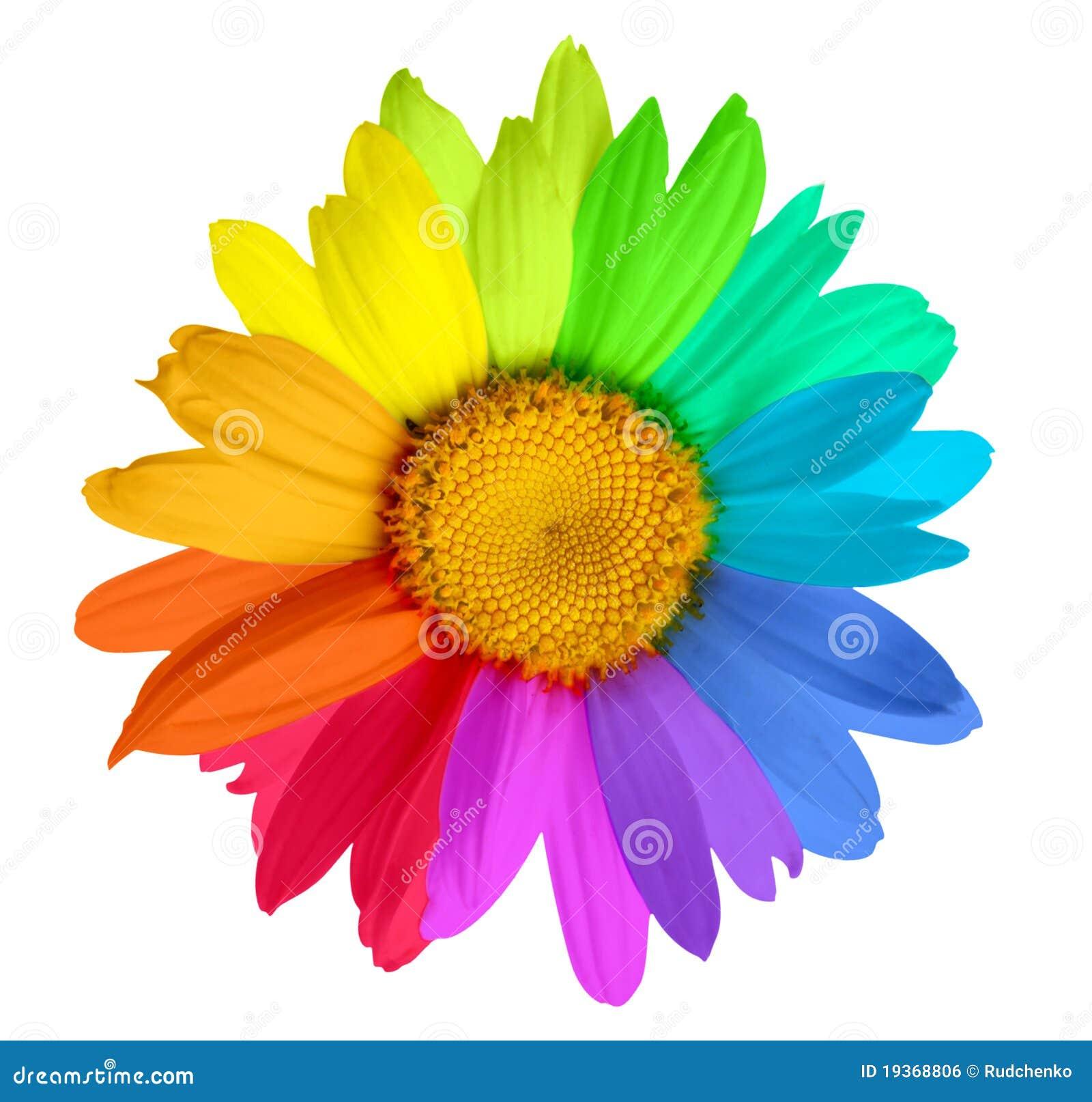 Flor colorido