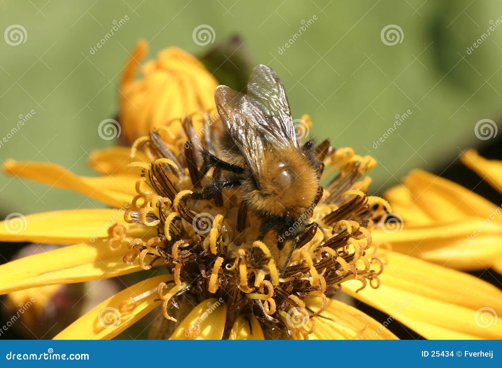 Flor con la abeja