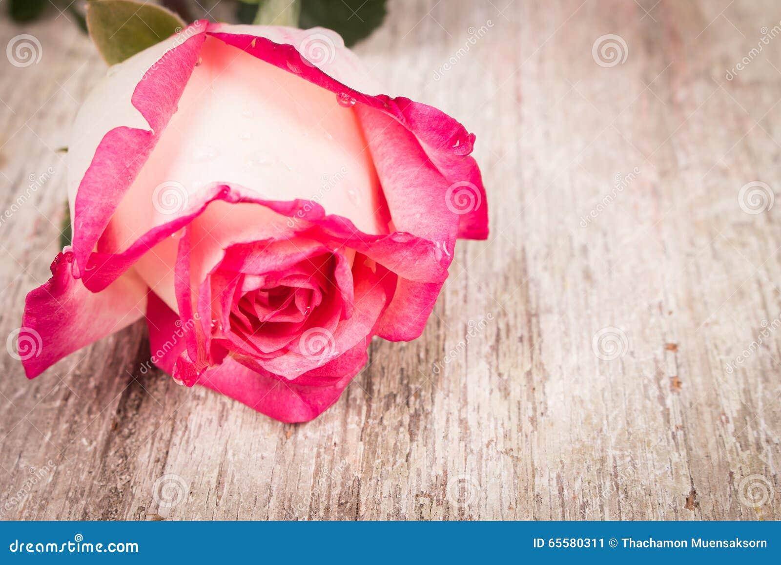 Flor cor-de-rosa da cor-de-rosa