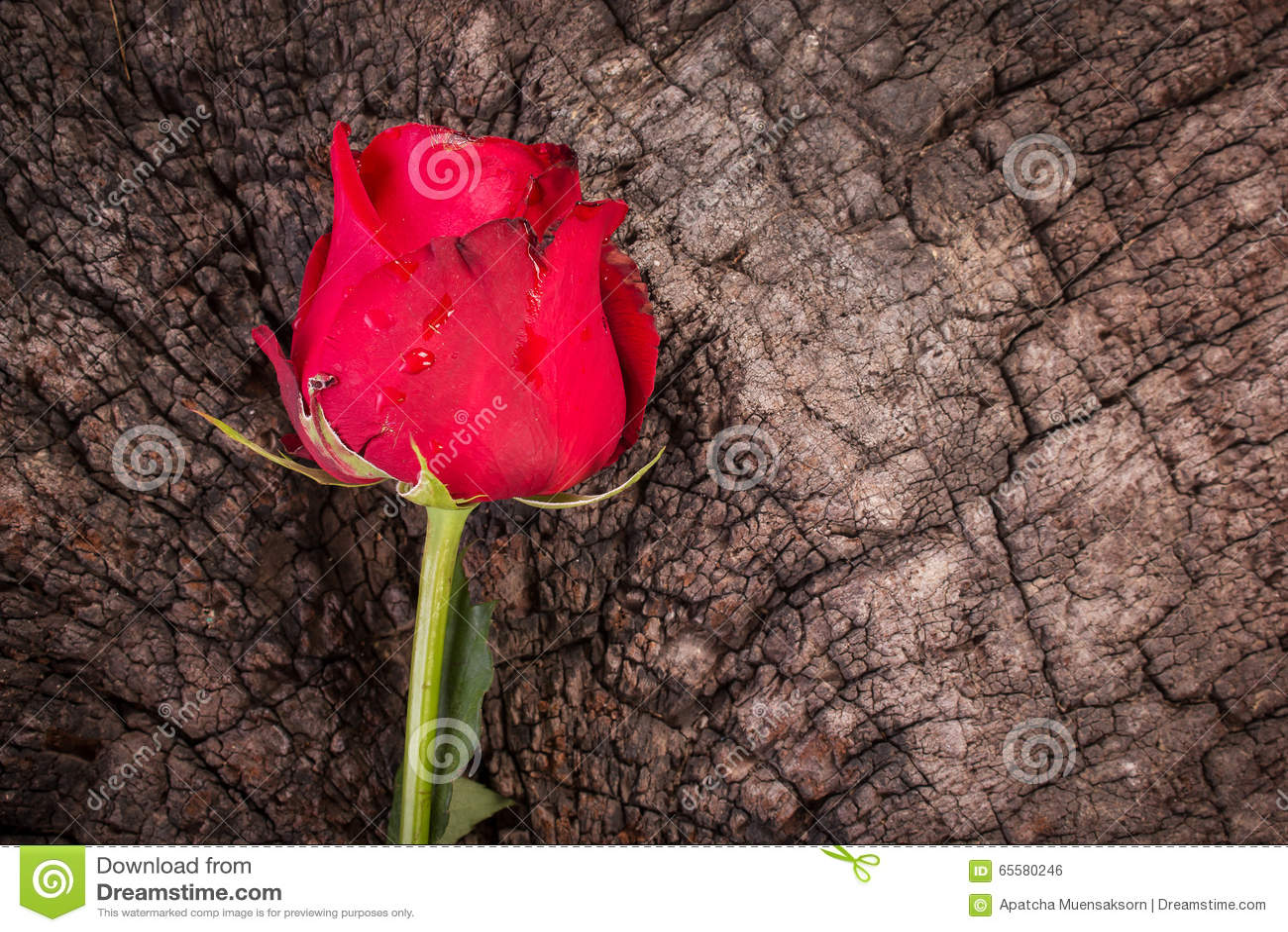 Flor cor-de-rosa do vermelho