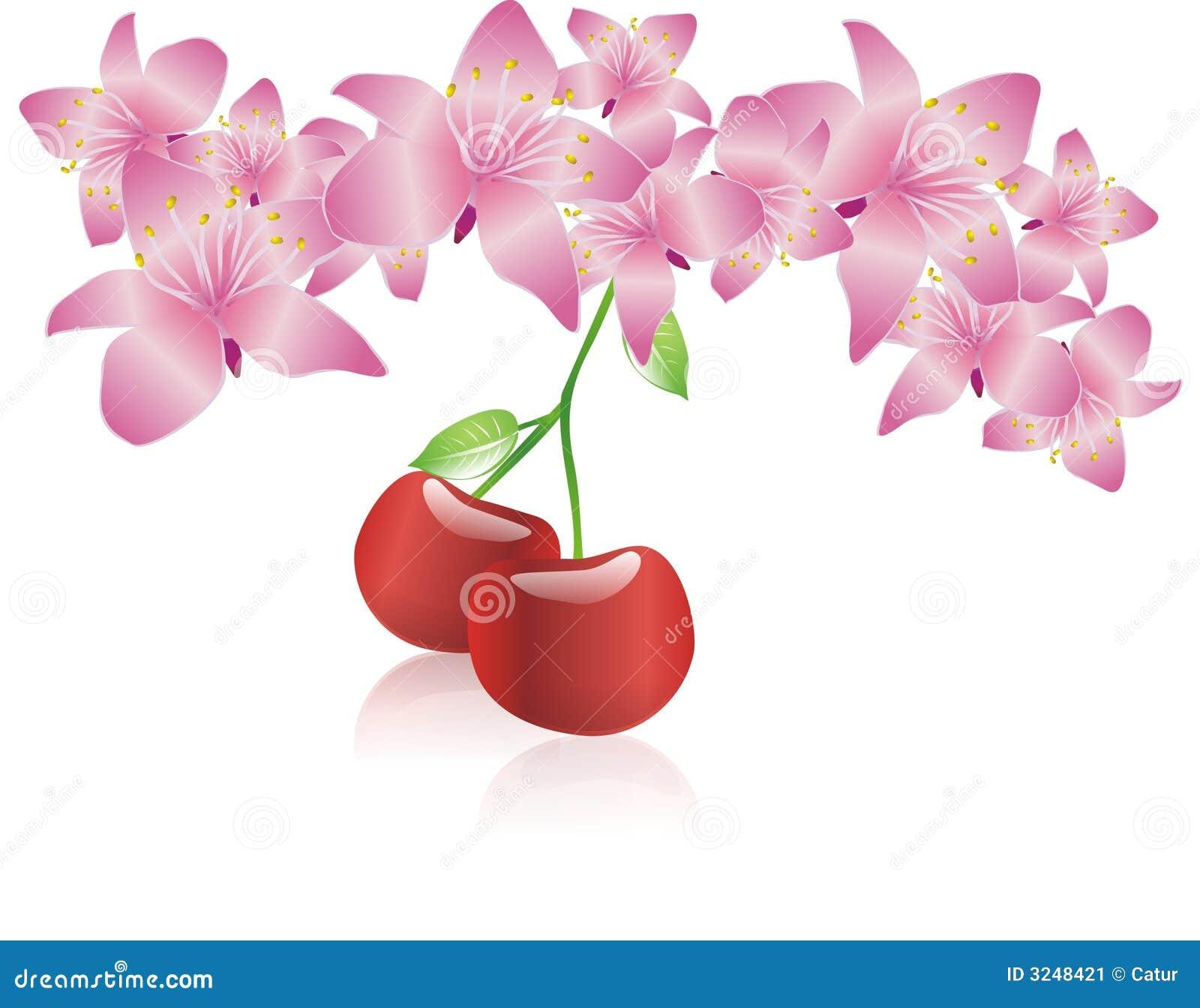 Flor da flor de cereja