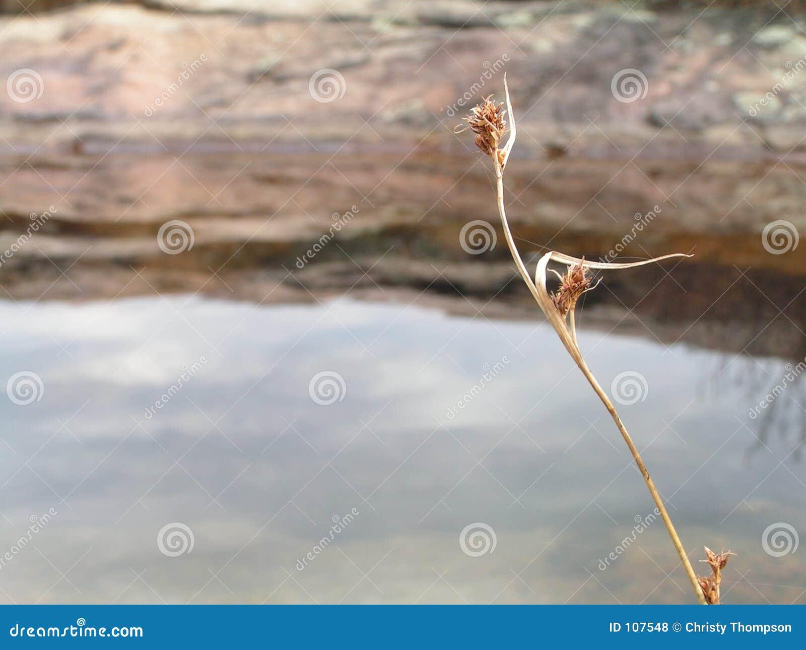 Flor da flor de encontro à água