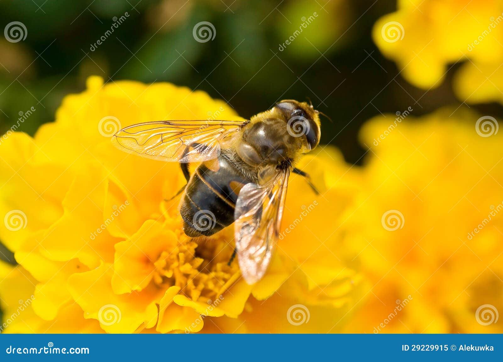 Download Flor da mola imagem de stock. Imagem de zumbido, pés - 29229915