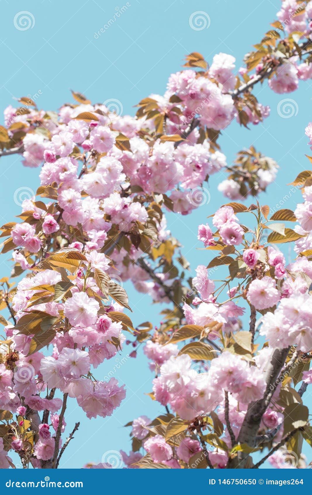 Flor da mola