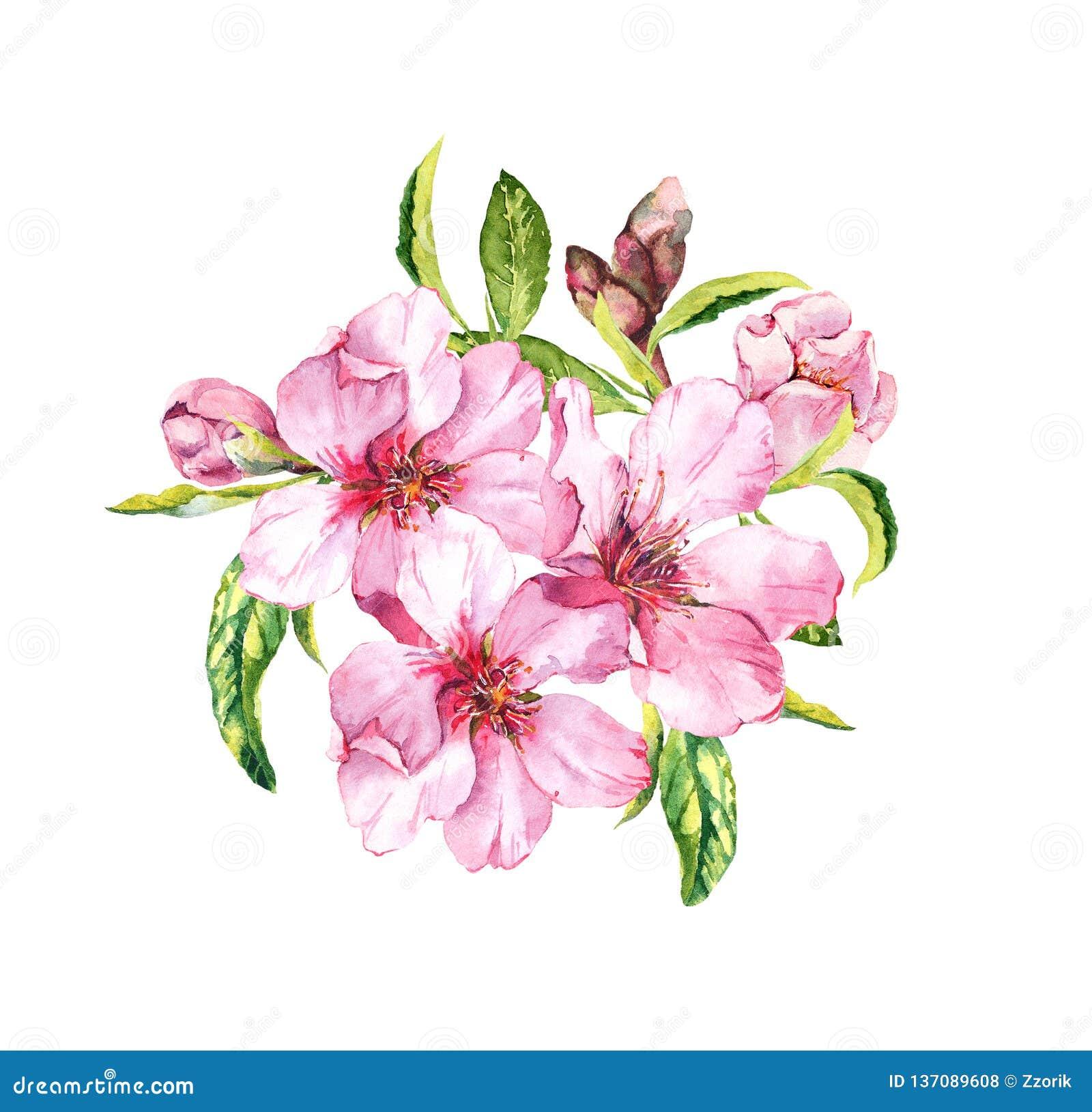 Flor da mola - ramalhete de sakura cor-de-rosa, flores da cereja Watercolour floral da primavera