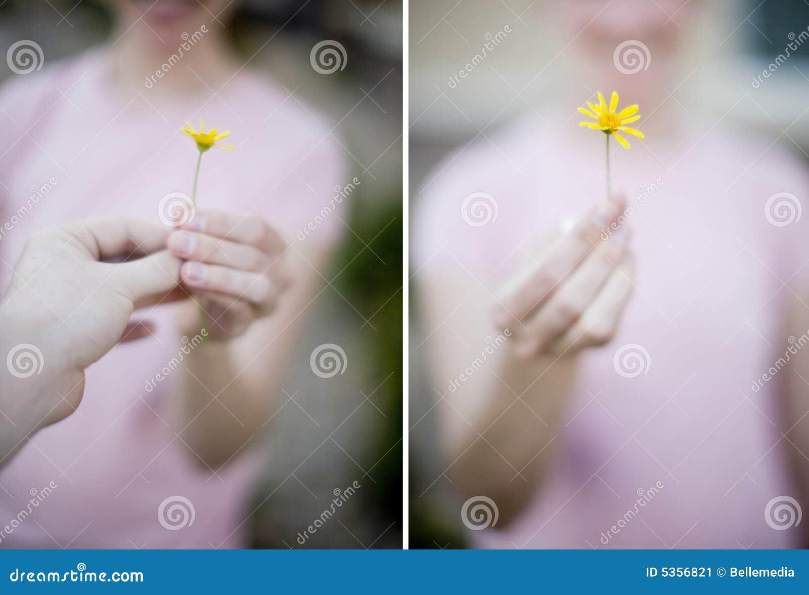 Flor da mulher
