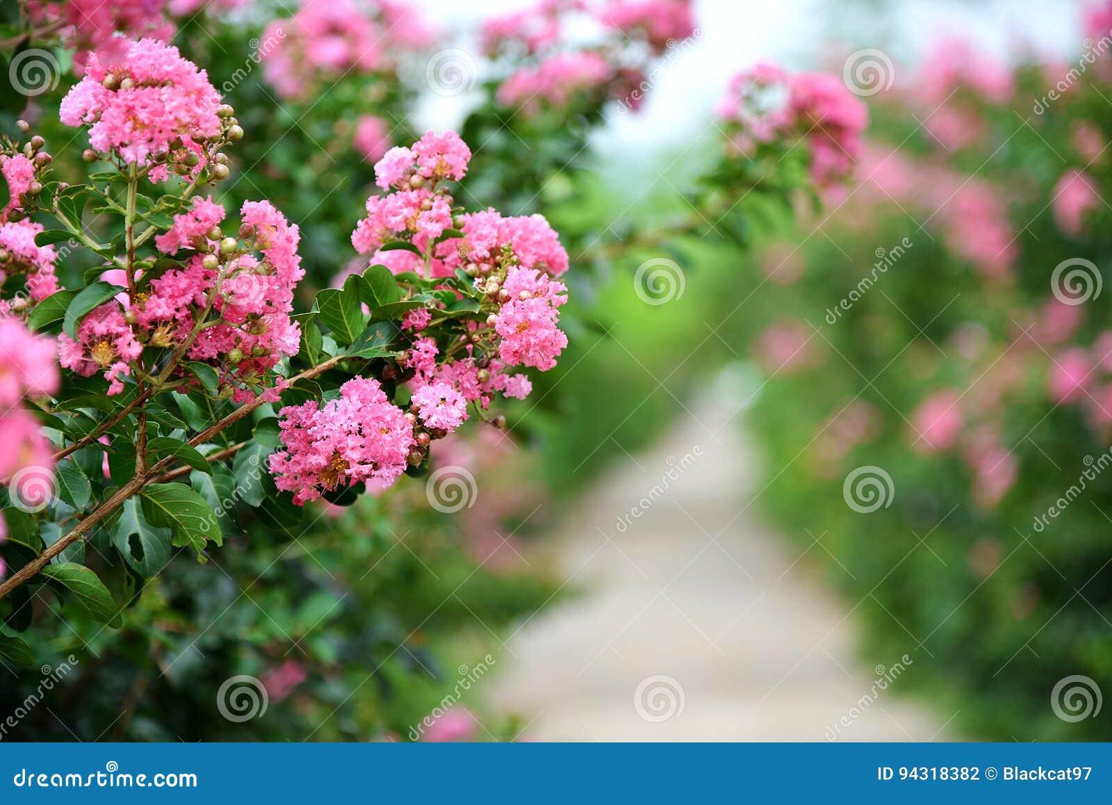 Flor da murta de crepe