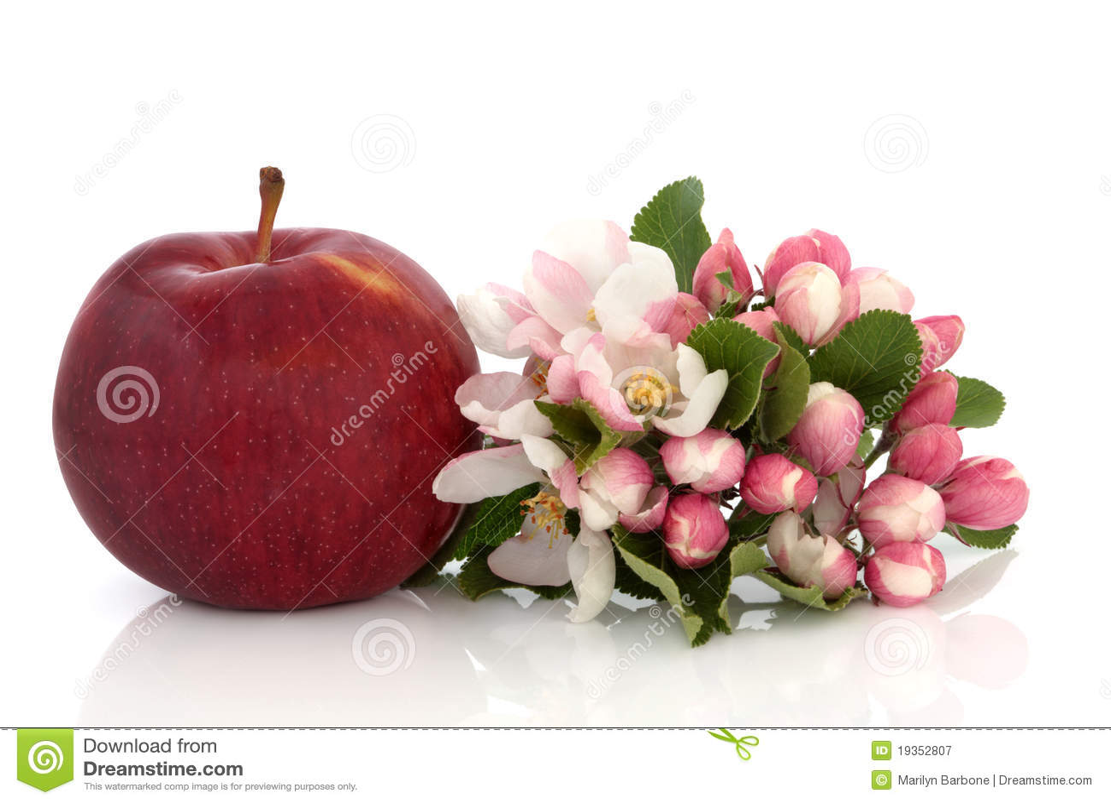 Flor de Apple e de flor