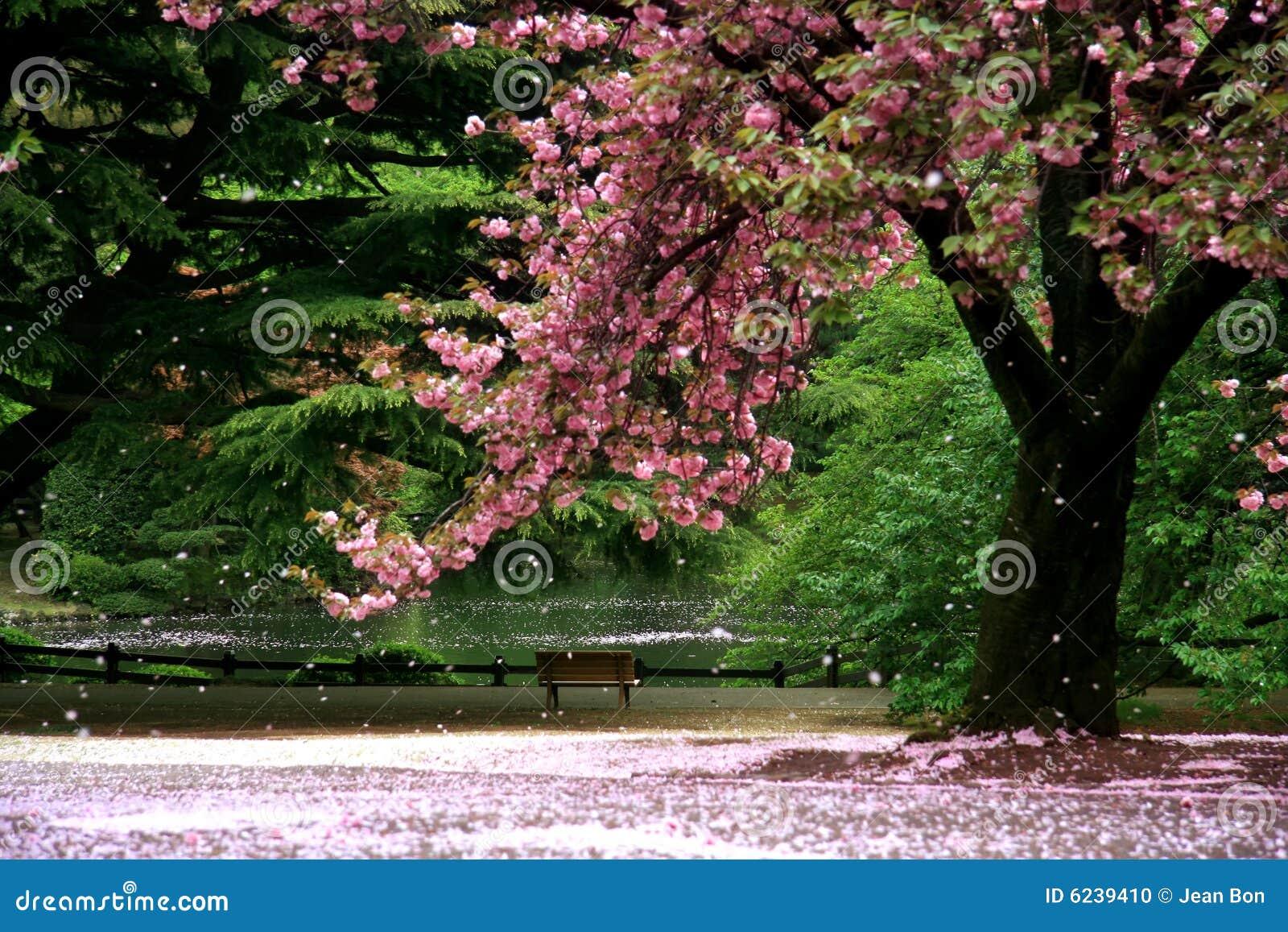 Flor de cereja mágica da vista