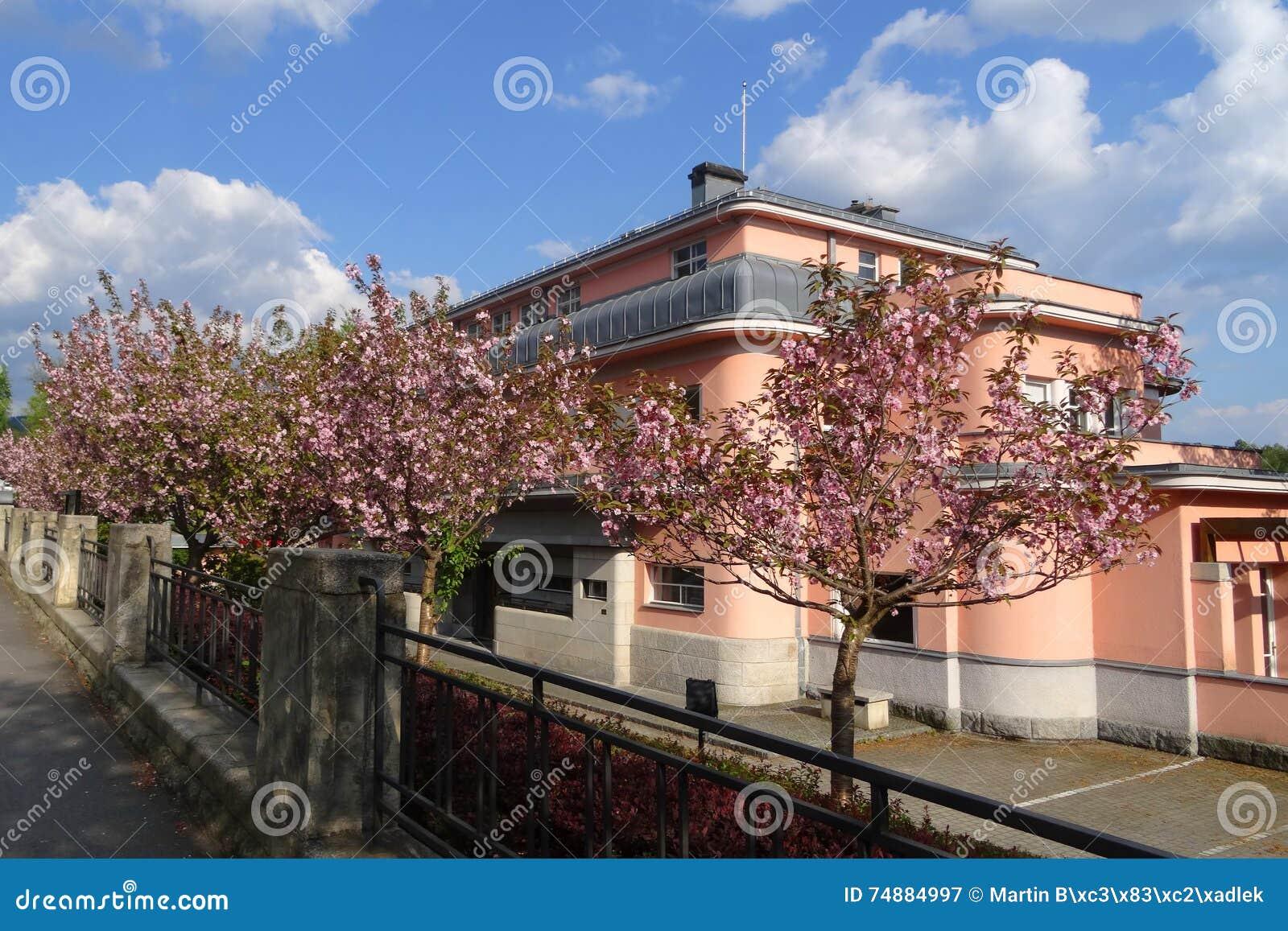 Flor de cerejeira na frente da construção