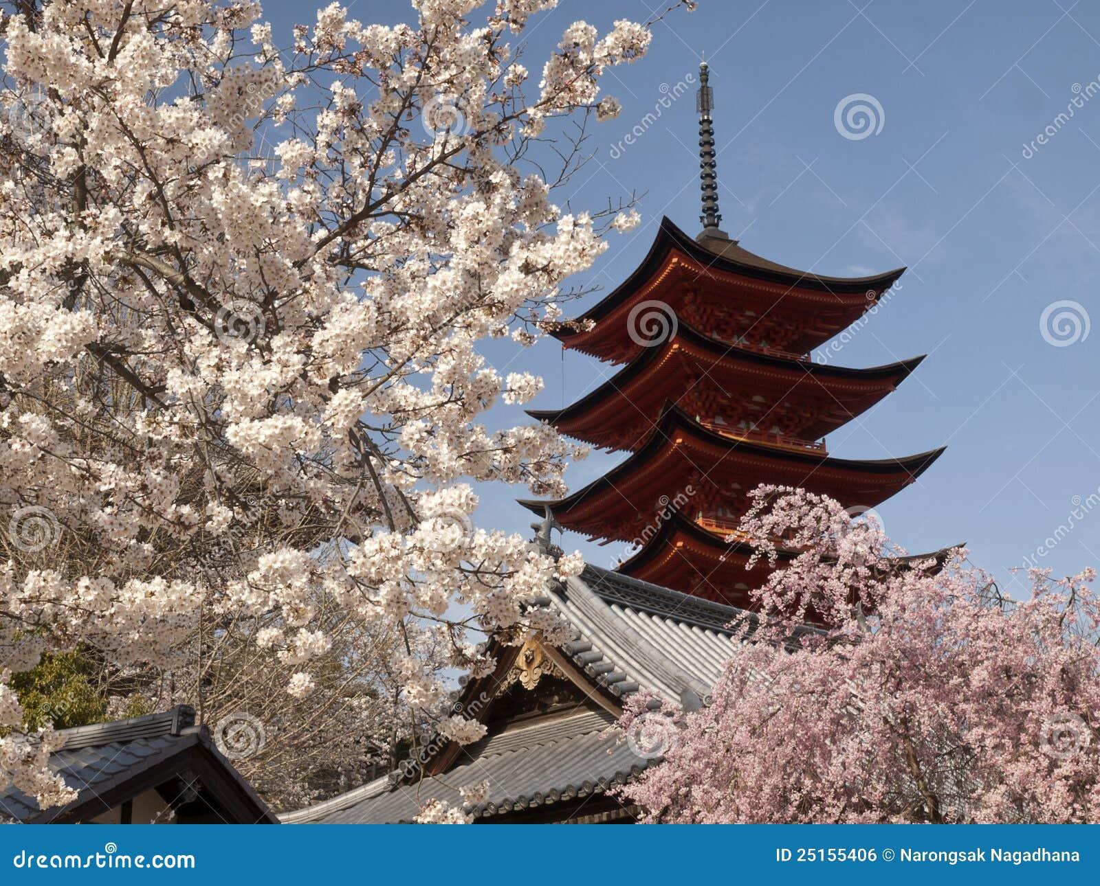 Flor de cereza con la pagoda
