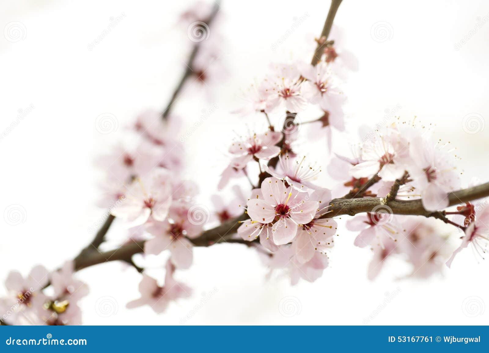 Una foto de una flor hermosa