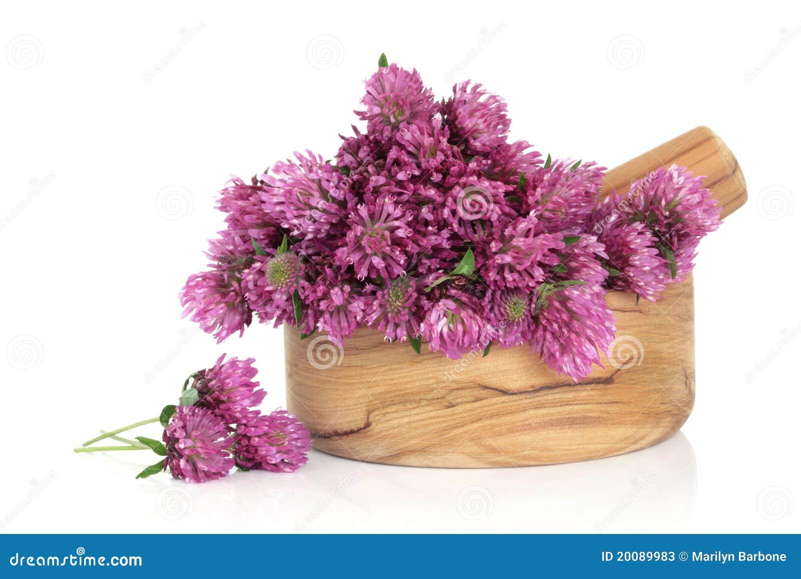 Flor de la flor del trébol