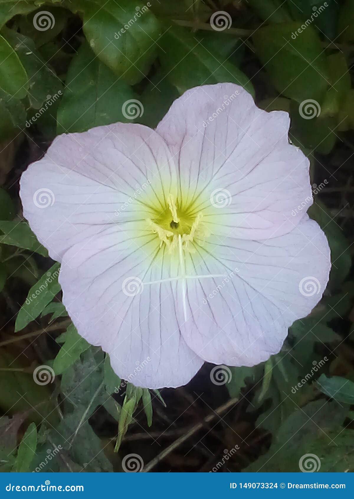 Flor de la floraci?n