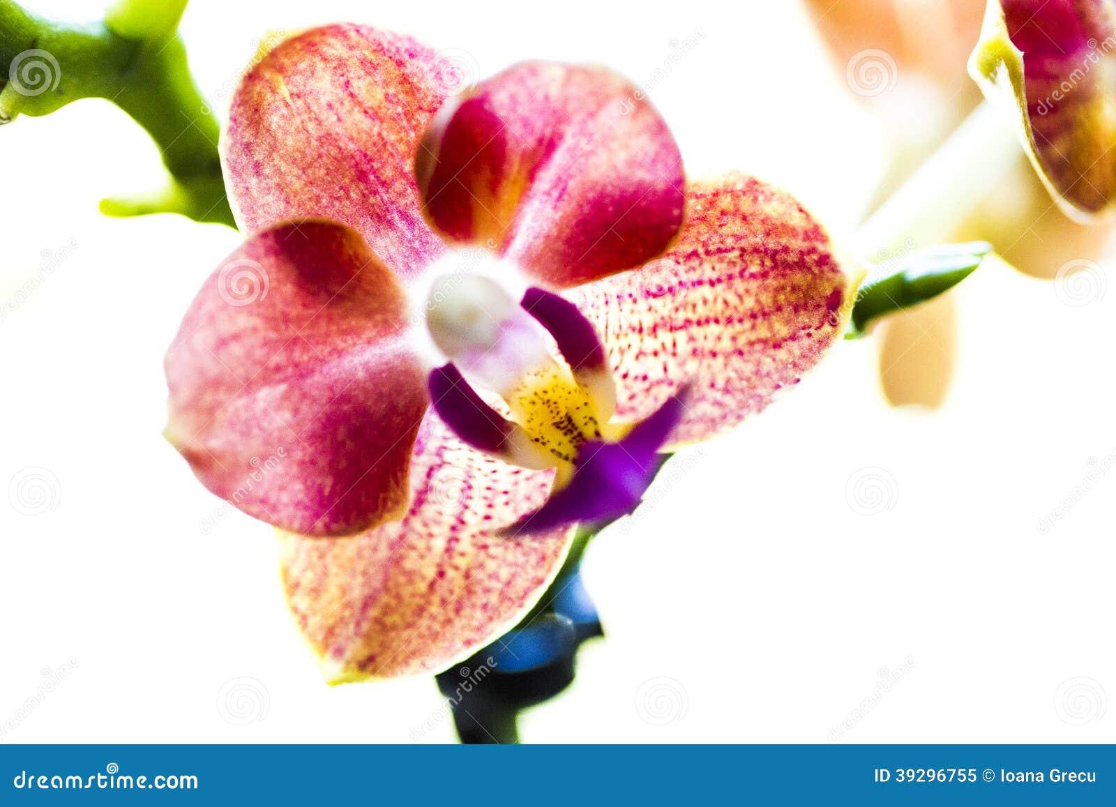 Flor de la orquídea