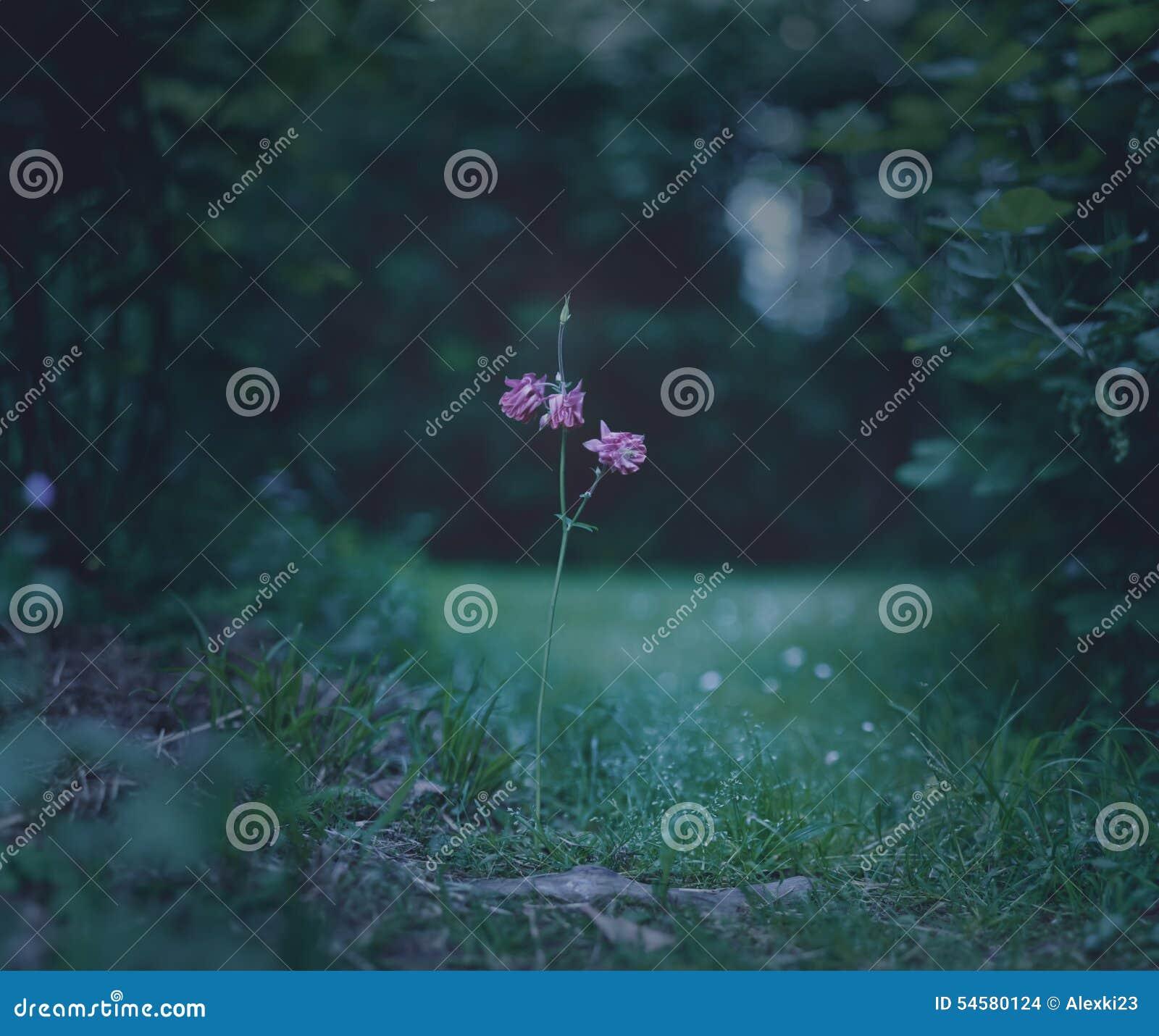 Flor de la trayectoria
