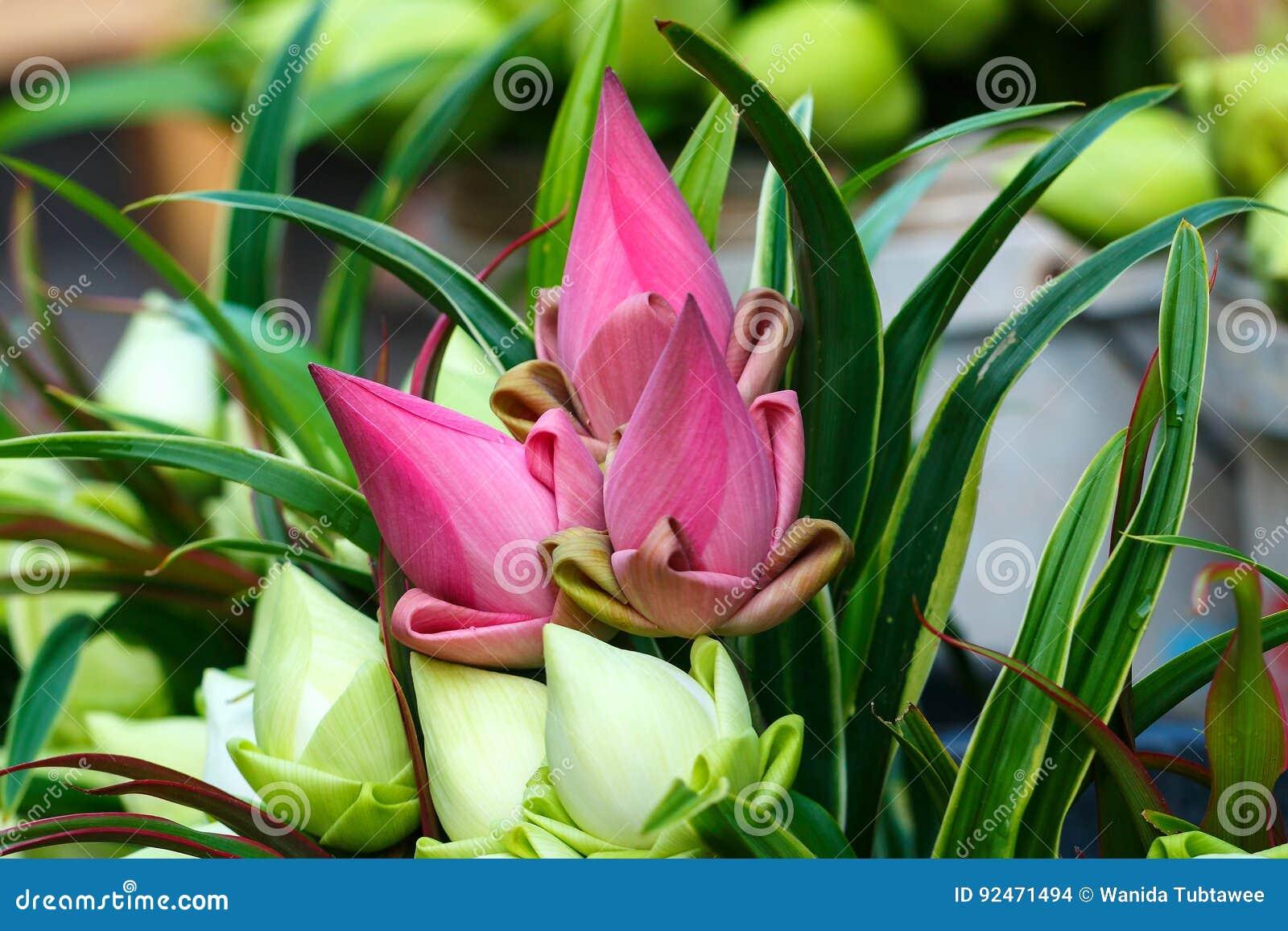 Flor De Lotus Flor De Loto Para La Adoración Budista Buda En El