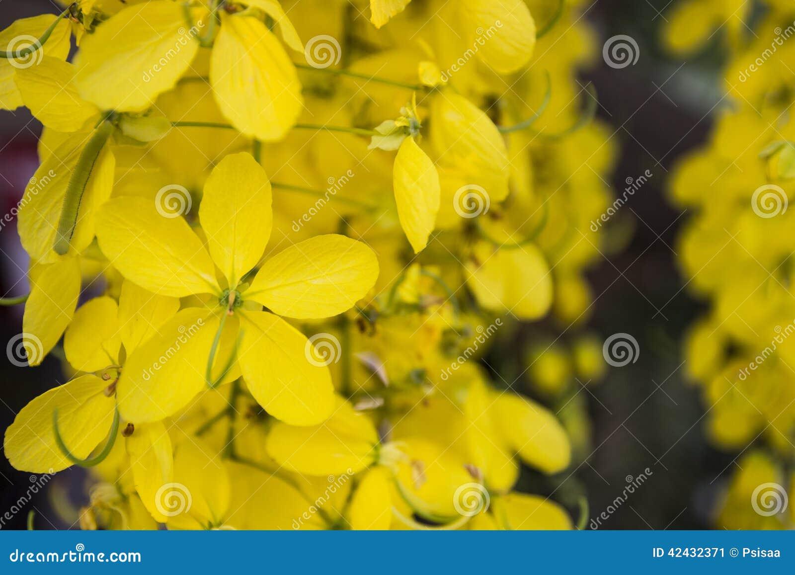 Flor de Puddingpipe