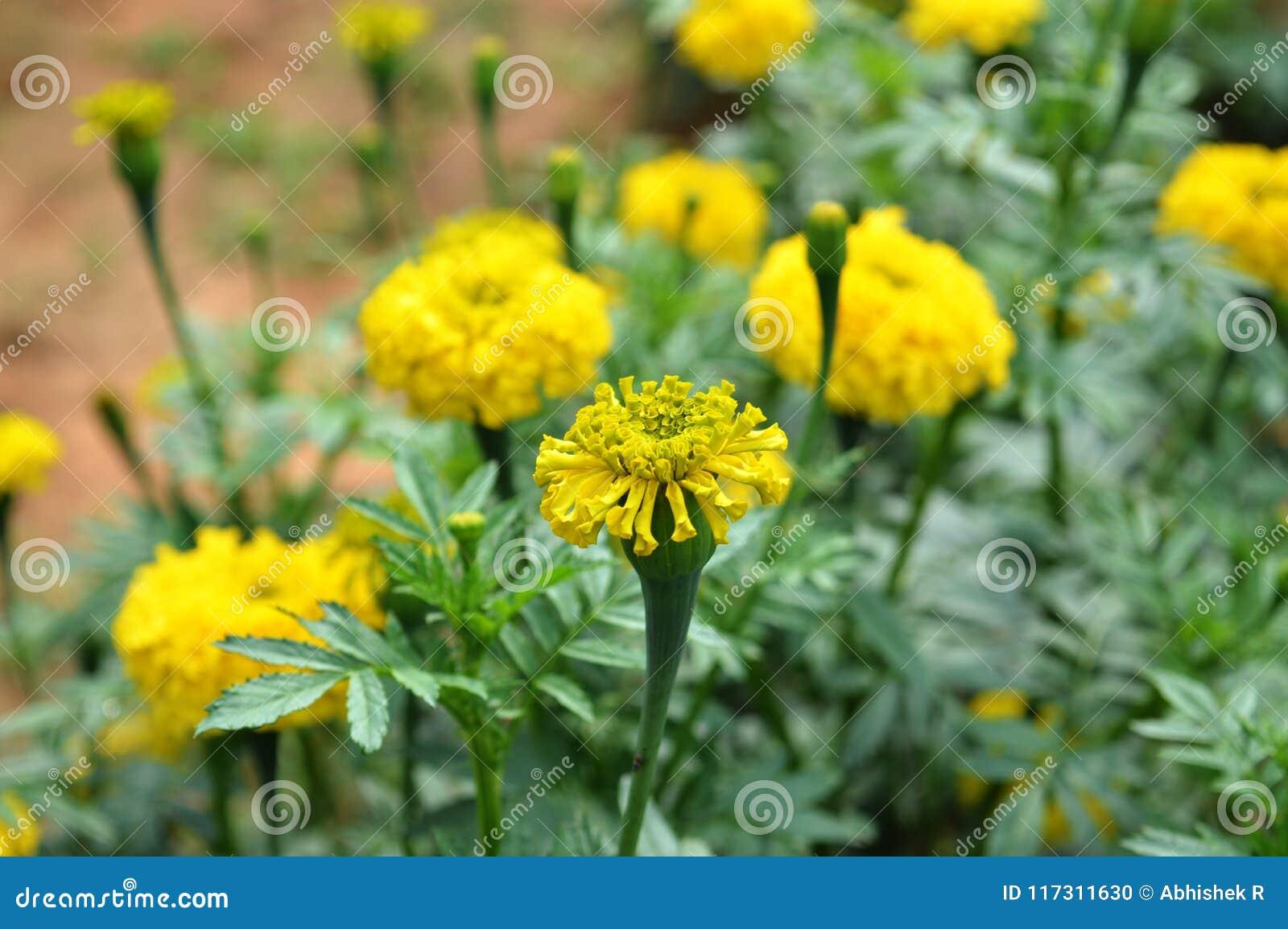 Flor defeituosa