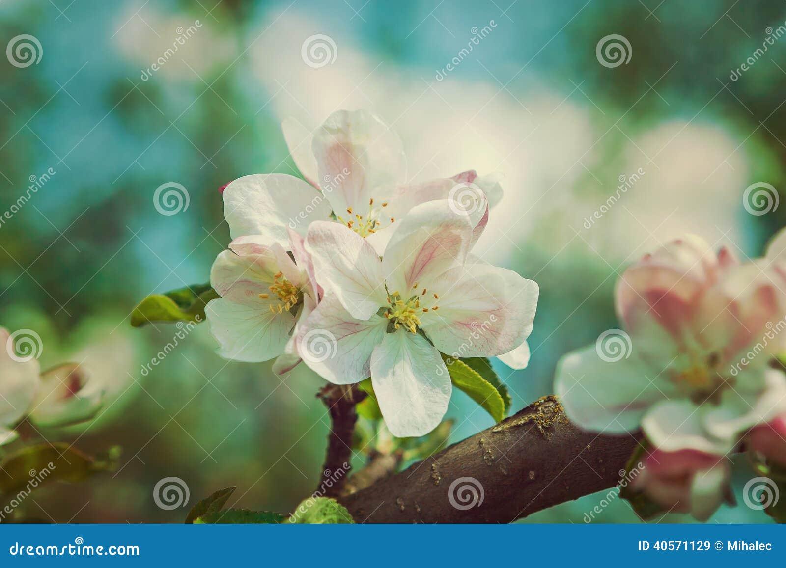 Flor del cierre del Apple-árbol encima de la versión del estilo del inconformista