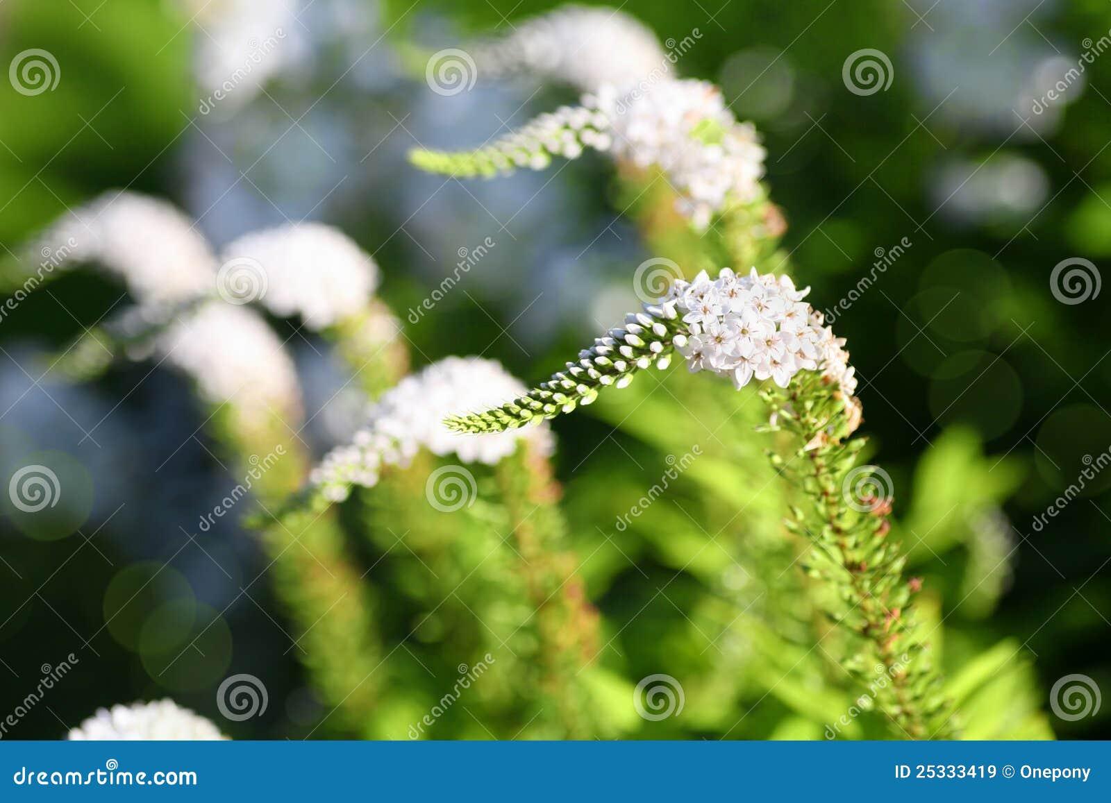 Flor del cuello de cisne