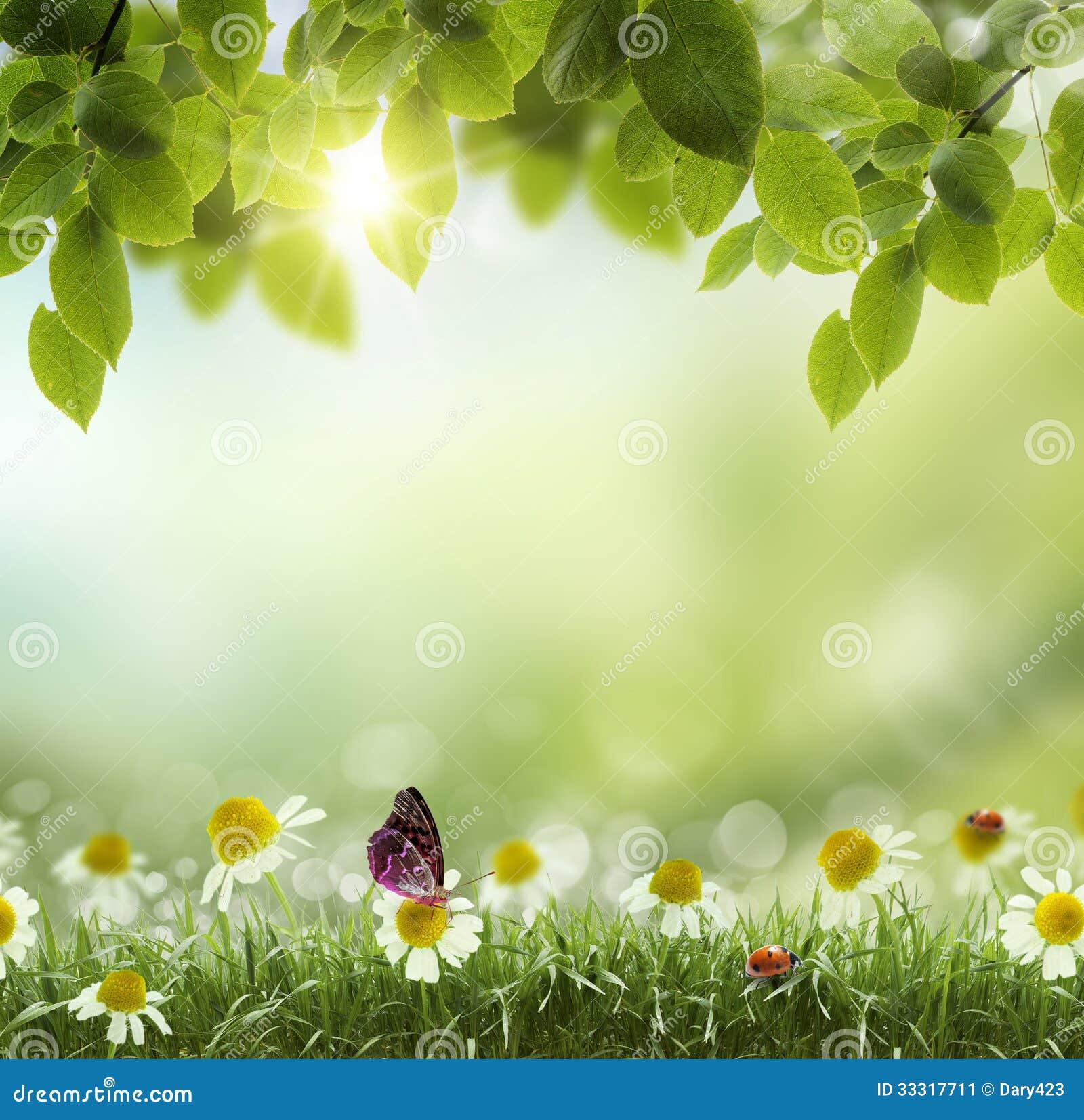 Flor del extracto .chamomile de la primavera o del calor del verano