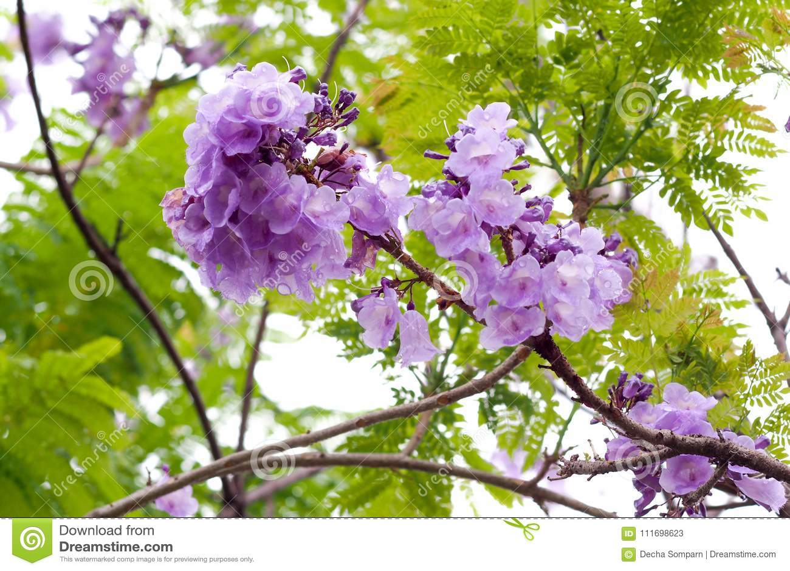 Magnífico Uñas Púrpura Y Oro Viñeta - Ideas de Pintar de Uñas ...