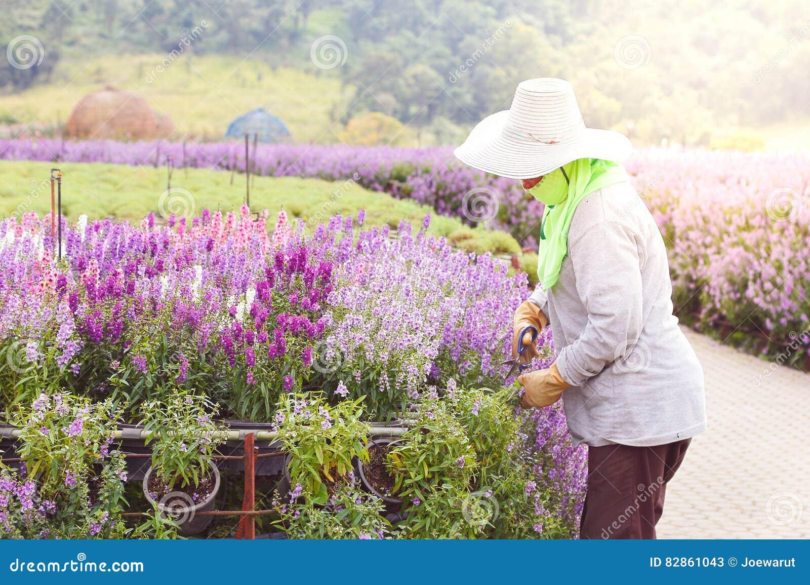 Flor del jardinero