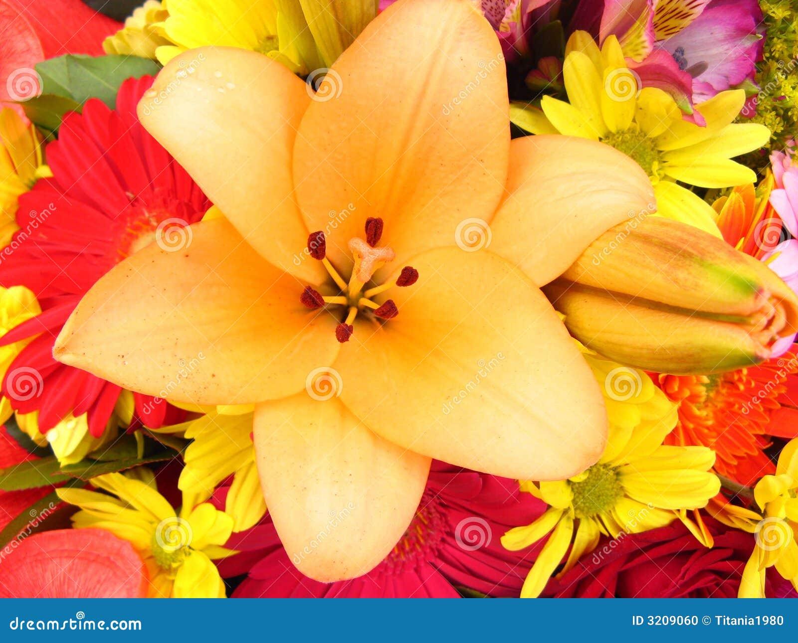 Flor del lirio
