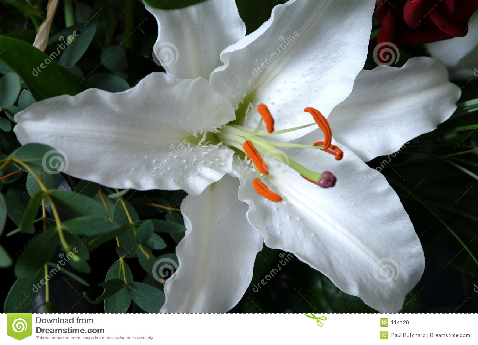 Magnífico Plantilla De Almohadilla De Lirio Imprimible Ornamento ...
