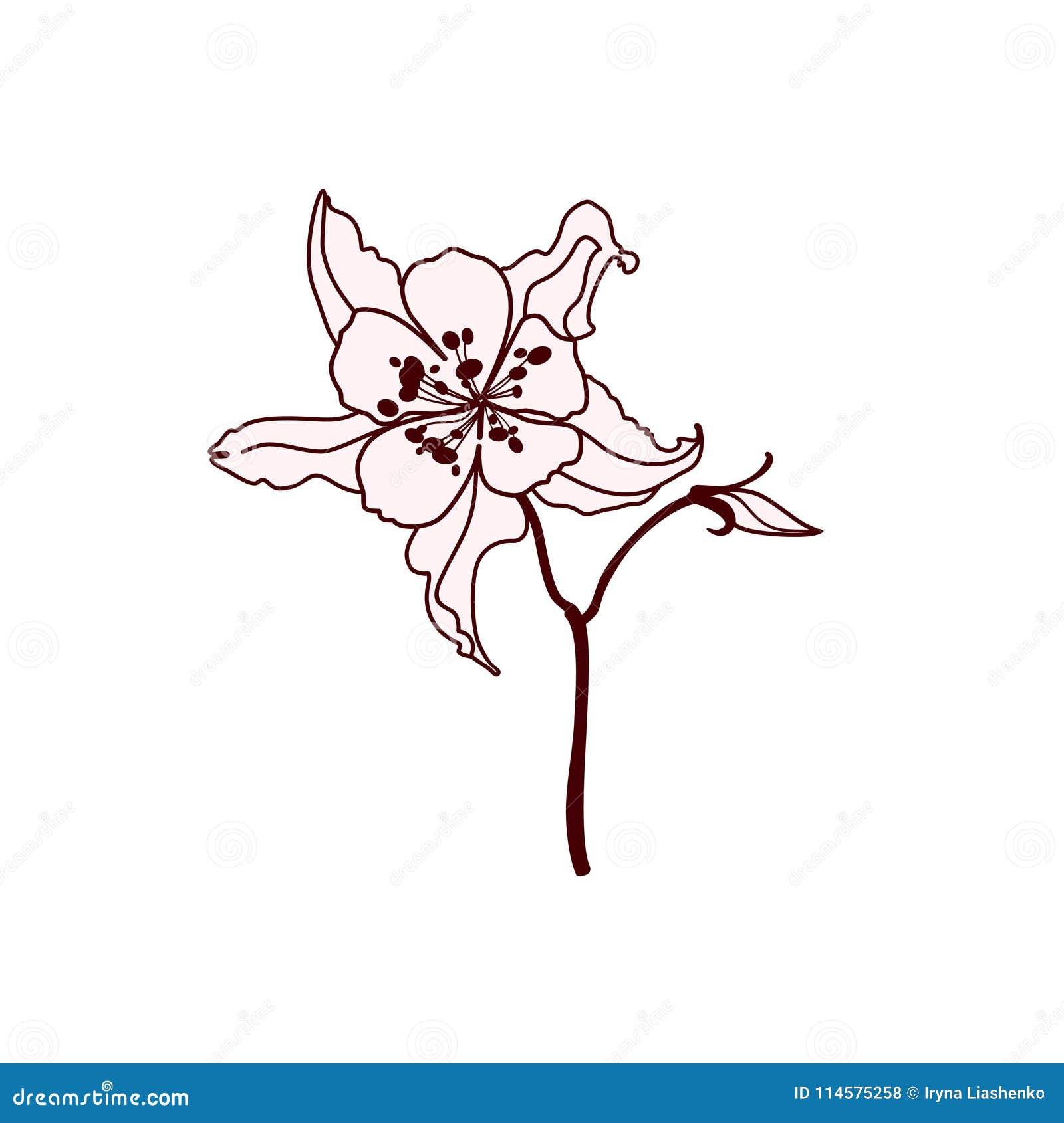 Flor Delicada Da Mola Bonita Ilustracao Stock Ilustracao De