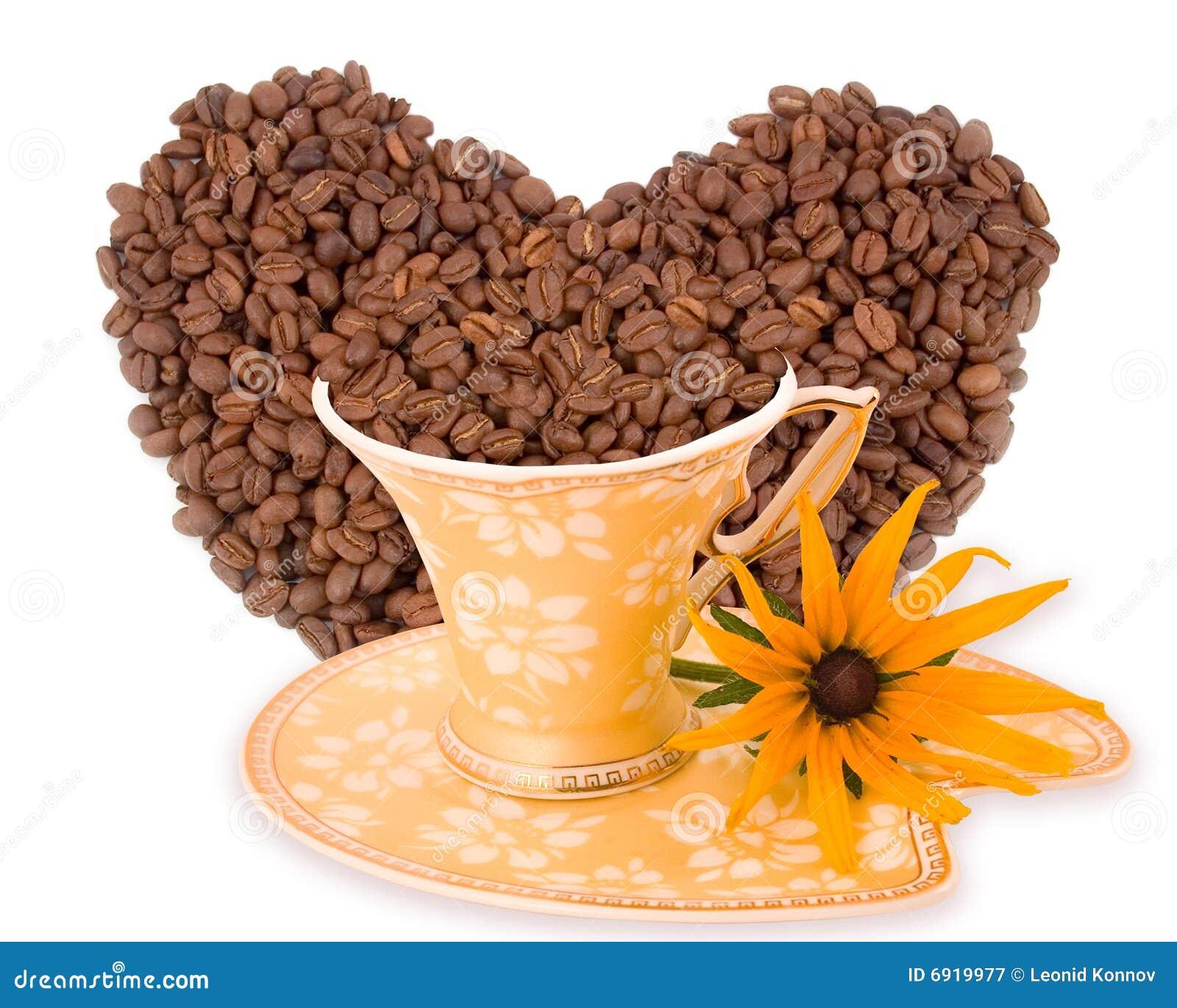 Flor do amarelo do aroma do café