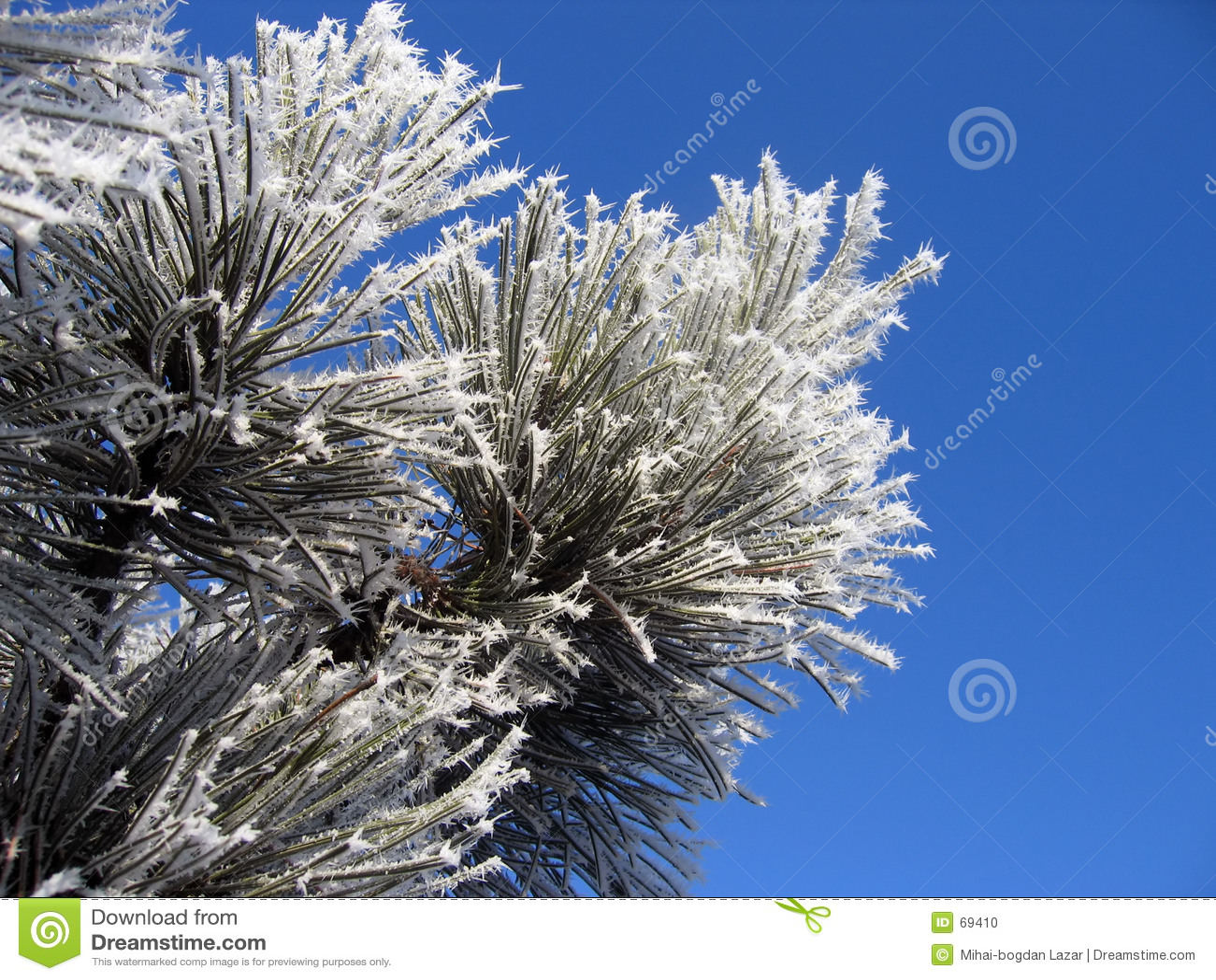 Flor do inverno