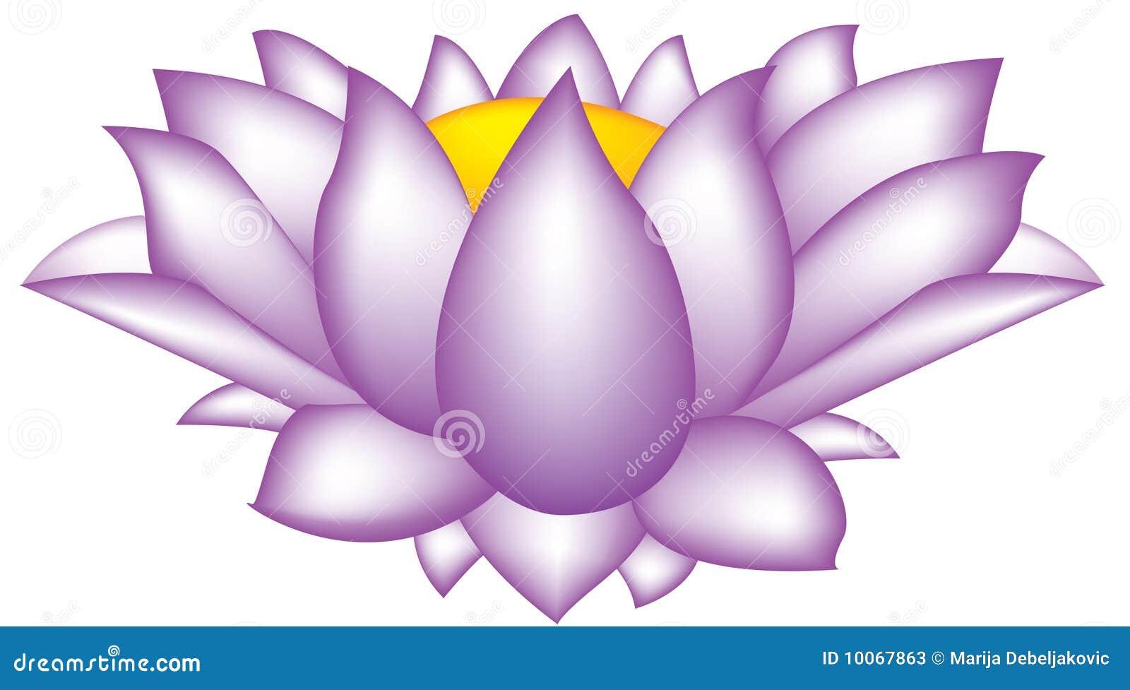 Flor dos lótus