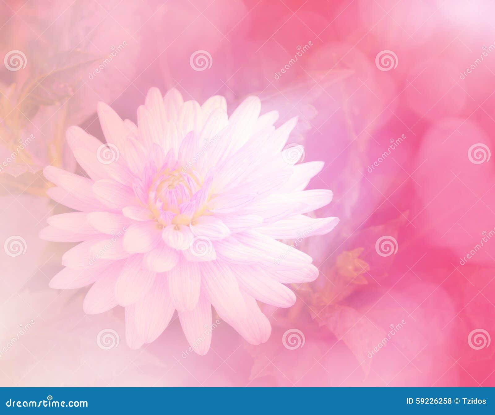 Download Flor Dulce Del Color En Fondo Suave Del Estilo Foto de archivo - Imagen de fragilidad, delicado: 59226258