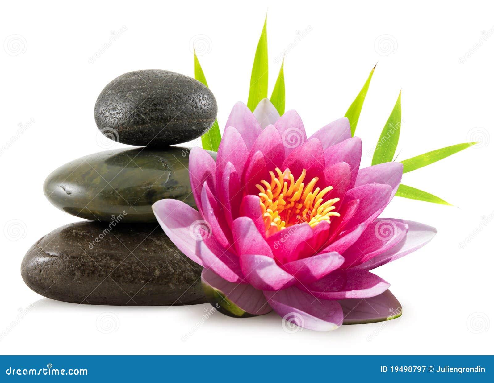 Flor e seixos dos lótus