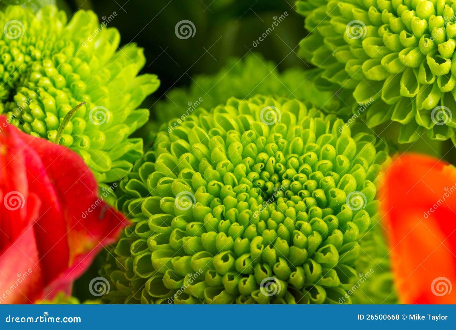 Flor em botão verde