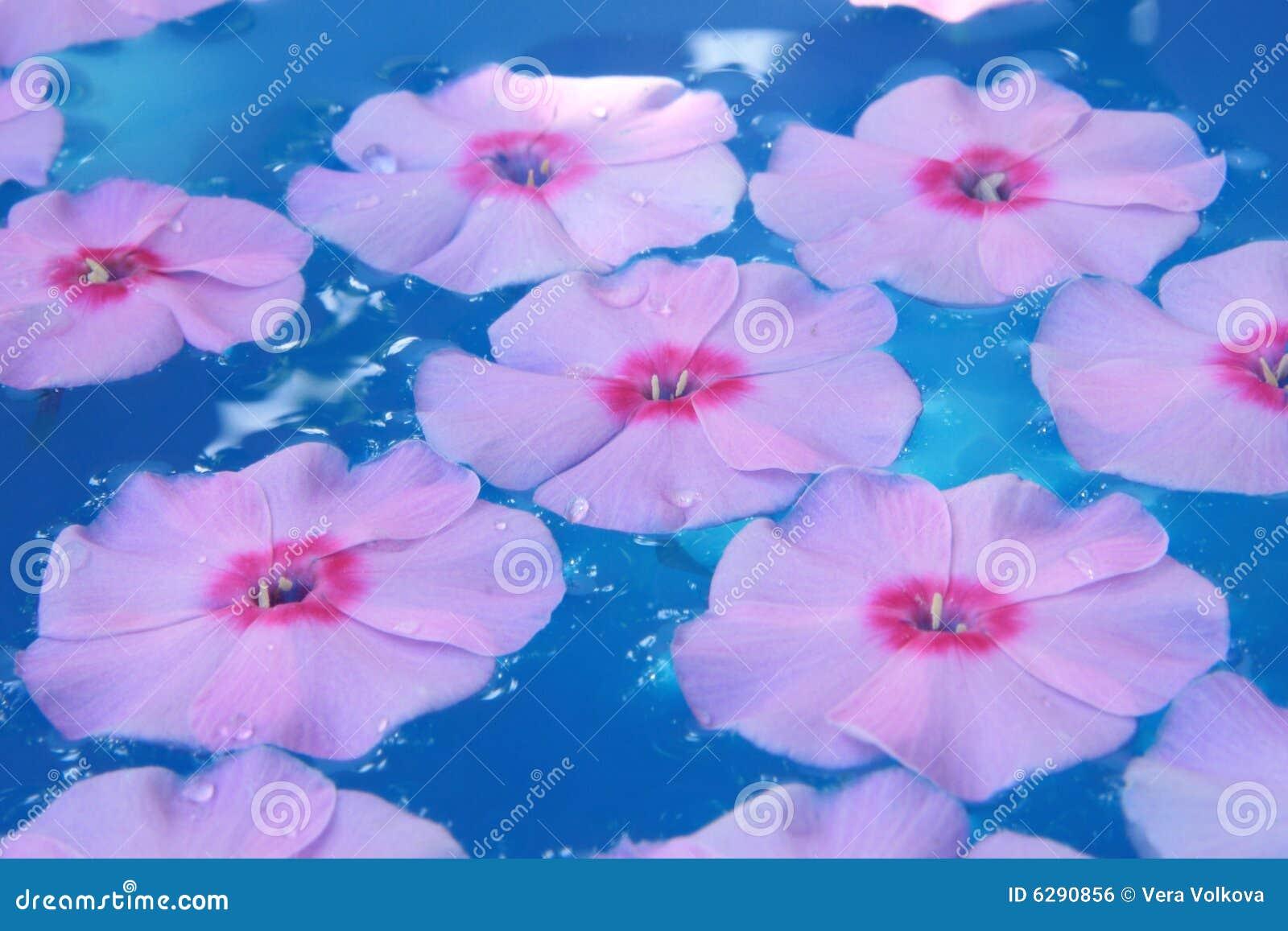 Flor en agua azul