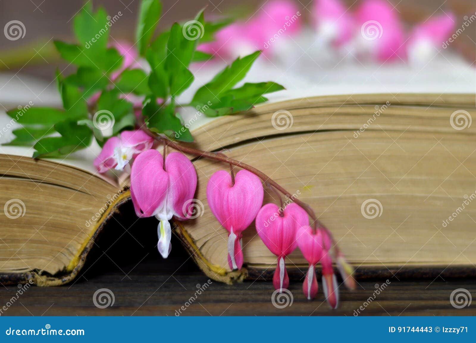 Flor En Forma De Corazón En El Libro Imagen De Archivo Imagen De
