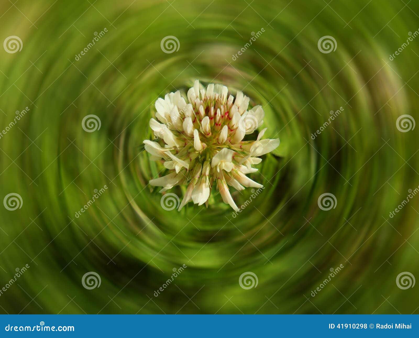 Flor en hierba