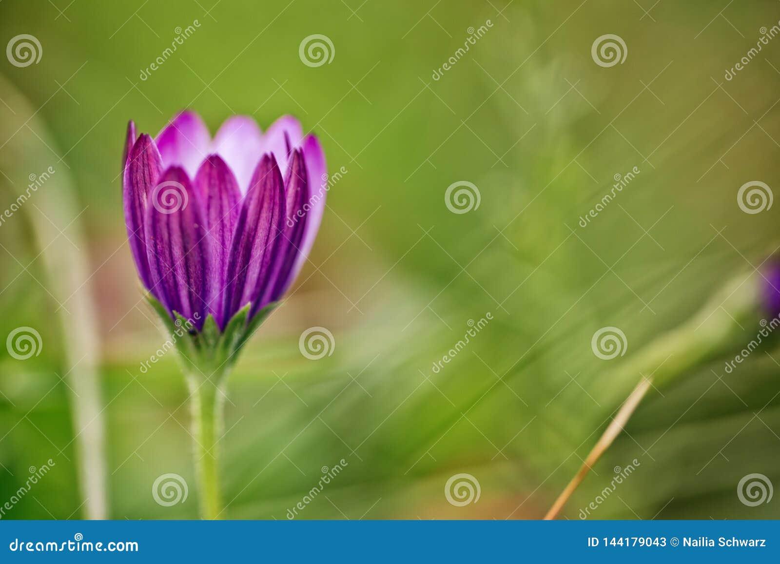 Flor en prado del verano